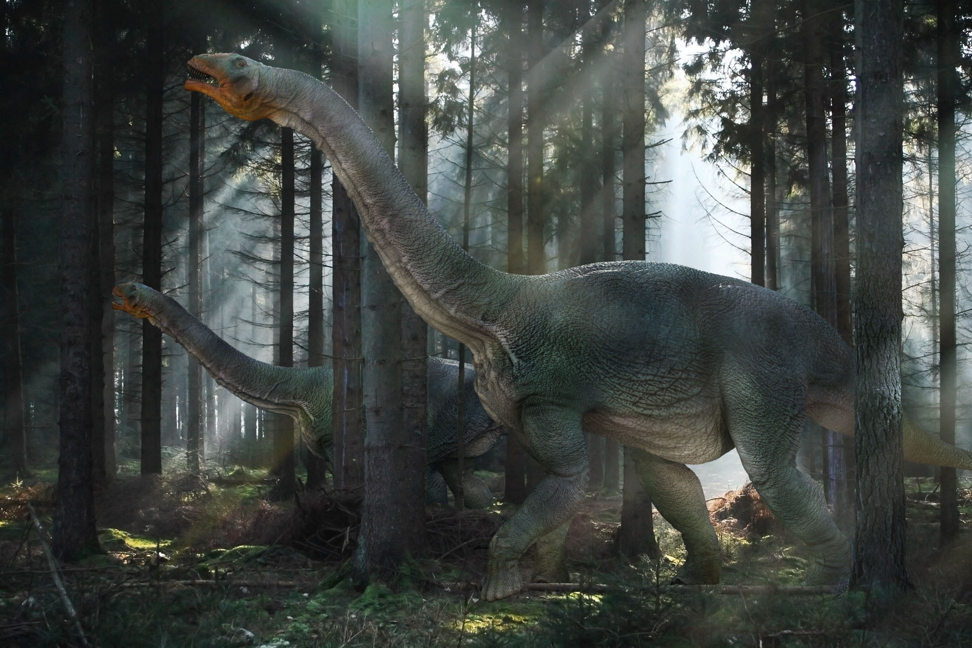69792 download wallpaper Animals, Dinosaur, Mesozoic Era, Stroll, Forest screensavers and pictures for free
