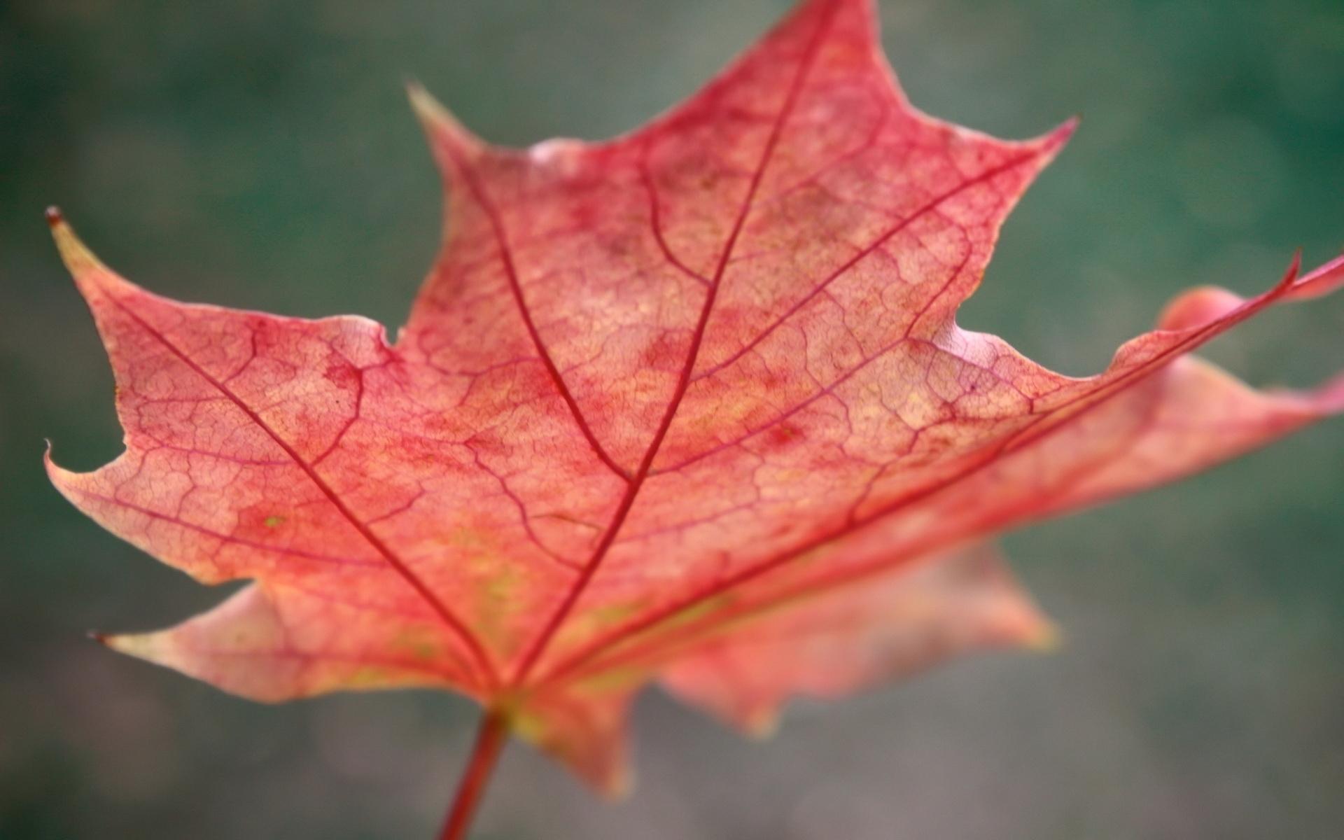 Скачать картинку Растения, Листья в телефон бесплатно.