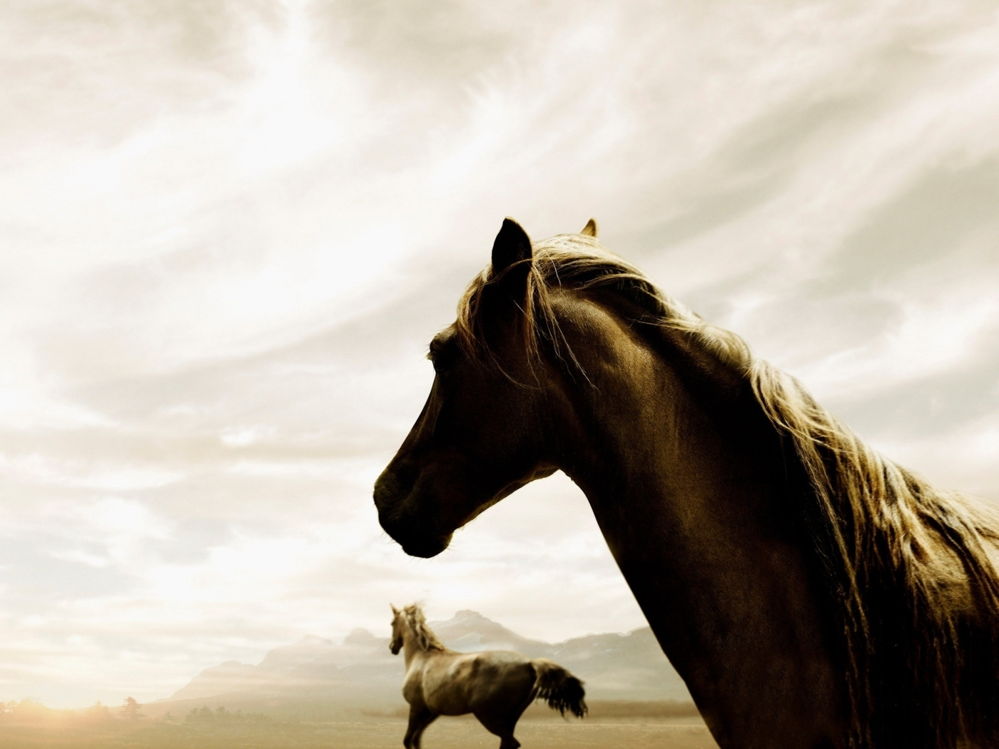 45145 download wallpaper Animals, Horses screensavers and pictures for free