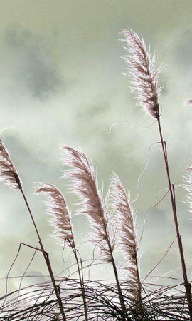 2501 скачать обои Растения, Трава - заставки и картинки бесплатно
