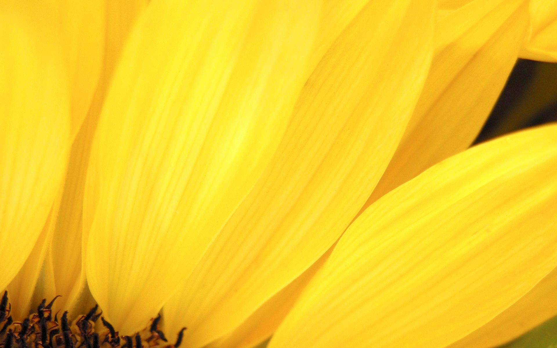 8062 скачать обои Цветы, Фон - заставки и картинки бесплатно