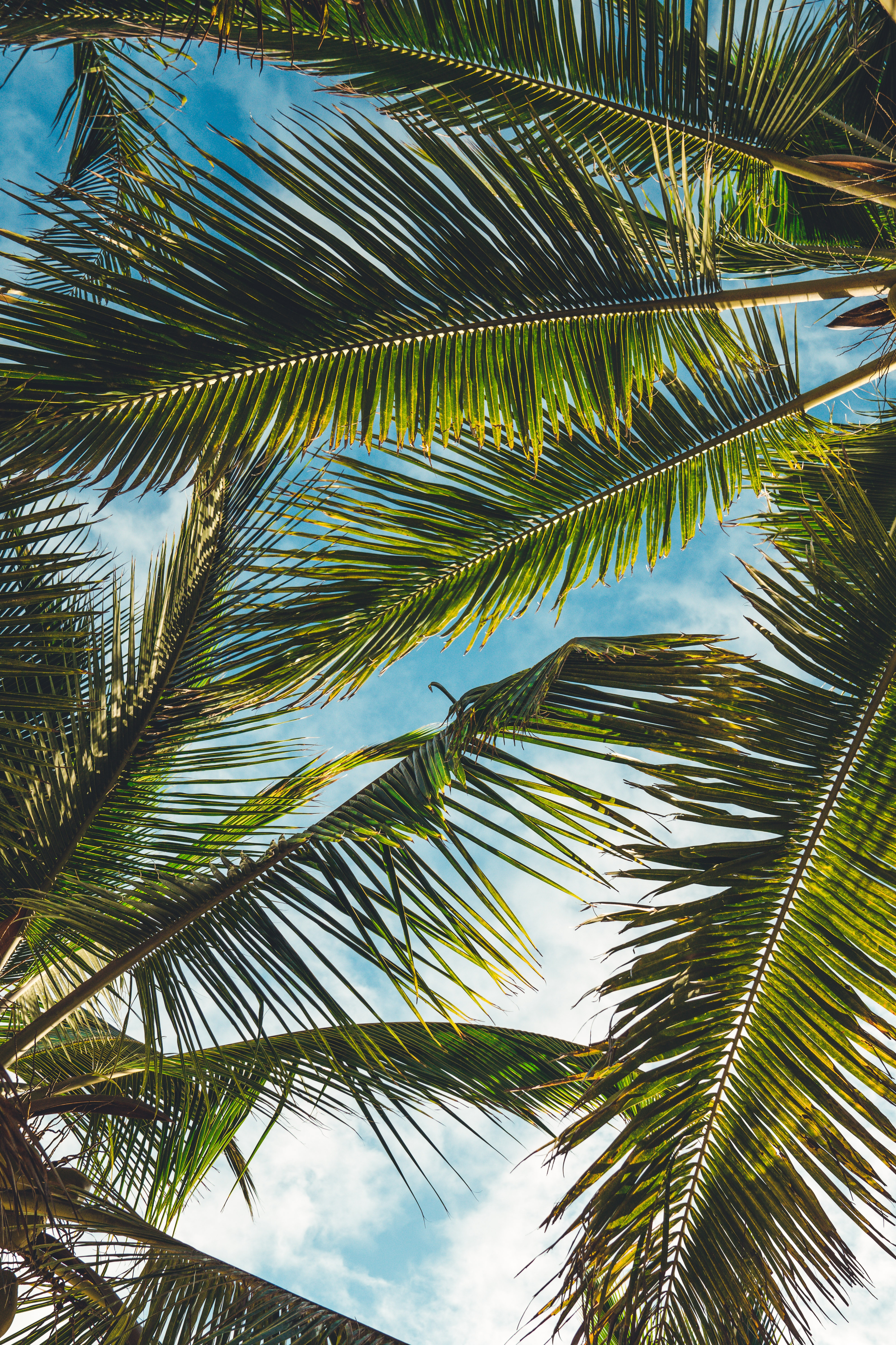 142723 download wallpaper Nature, Leaves, Branches, Tropics, Summer, Palms screensavers and pictures for free