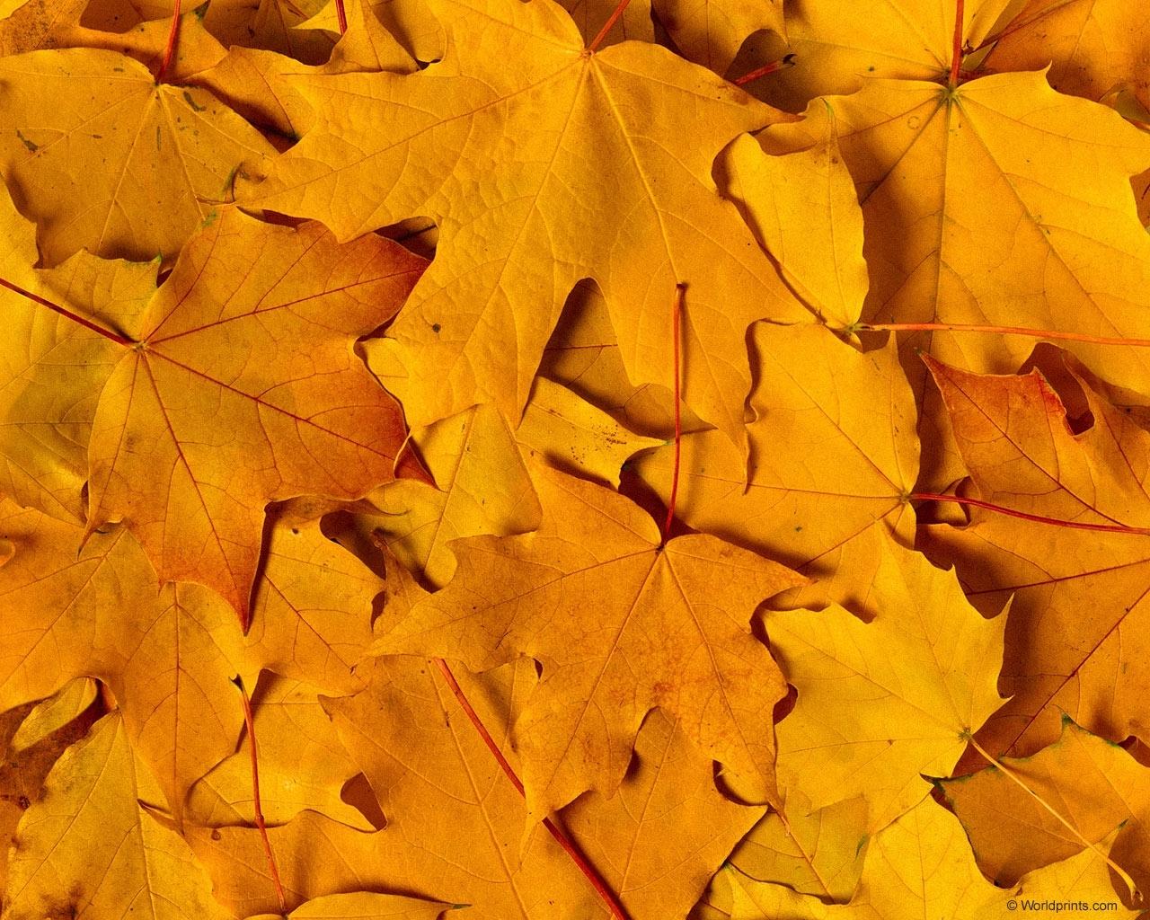 3730 скачать обои Фон, Осень, Листья - заставки и картинки бесплатно