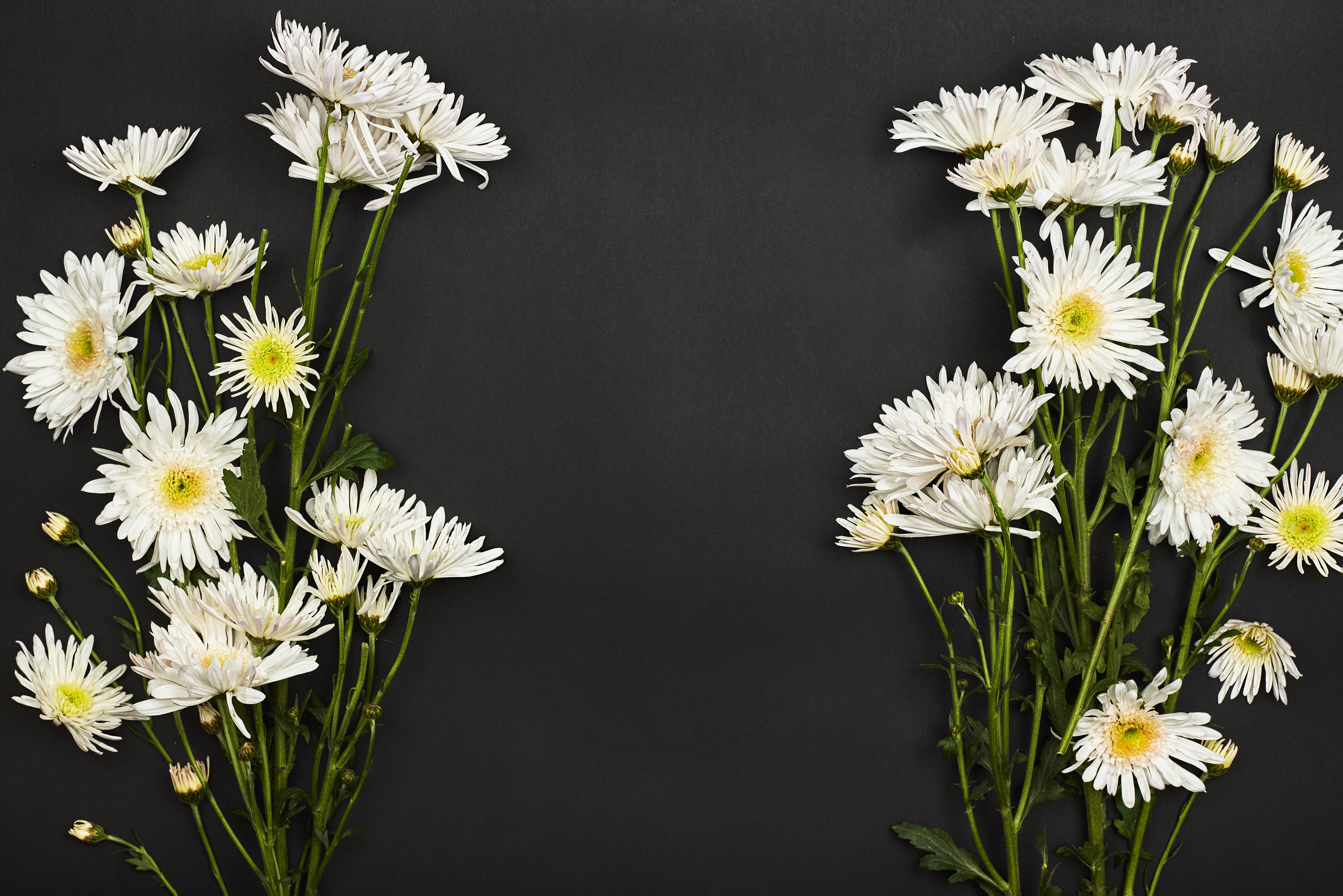 67243 скачать обои Цветы, Букет, Белый, Хризантемы - заставки и картинки бесплатно