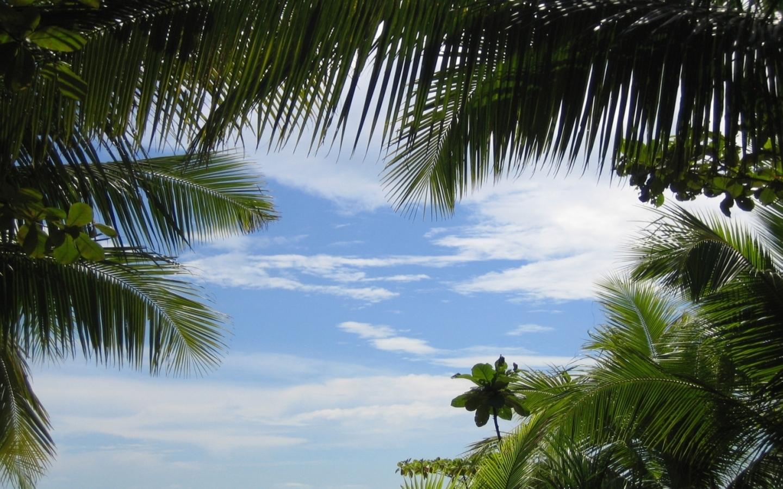 25931 скачать обои Пейзаж, Небо, Облака, Пальмы - заставки и картинки бесплатно