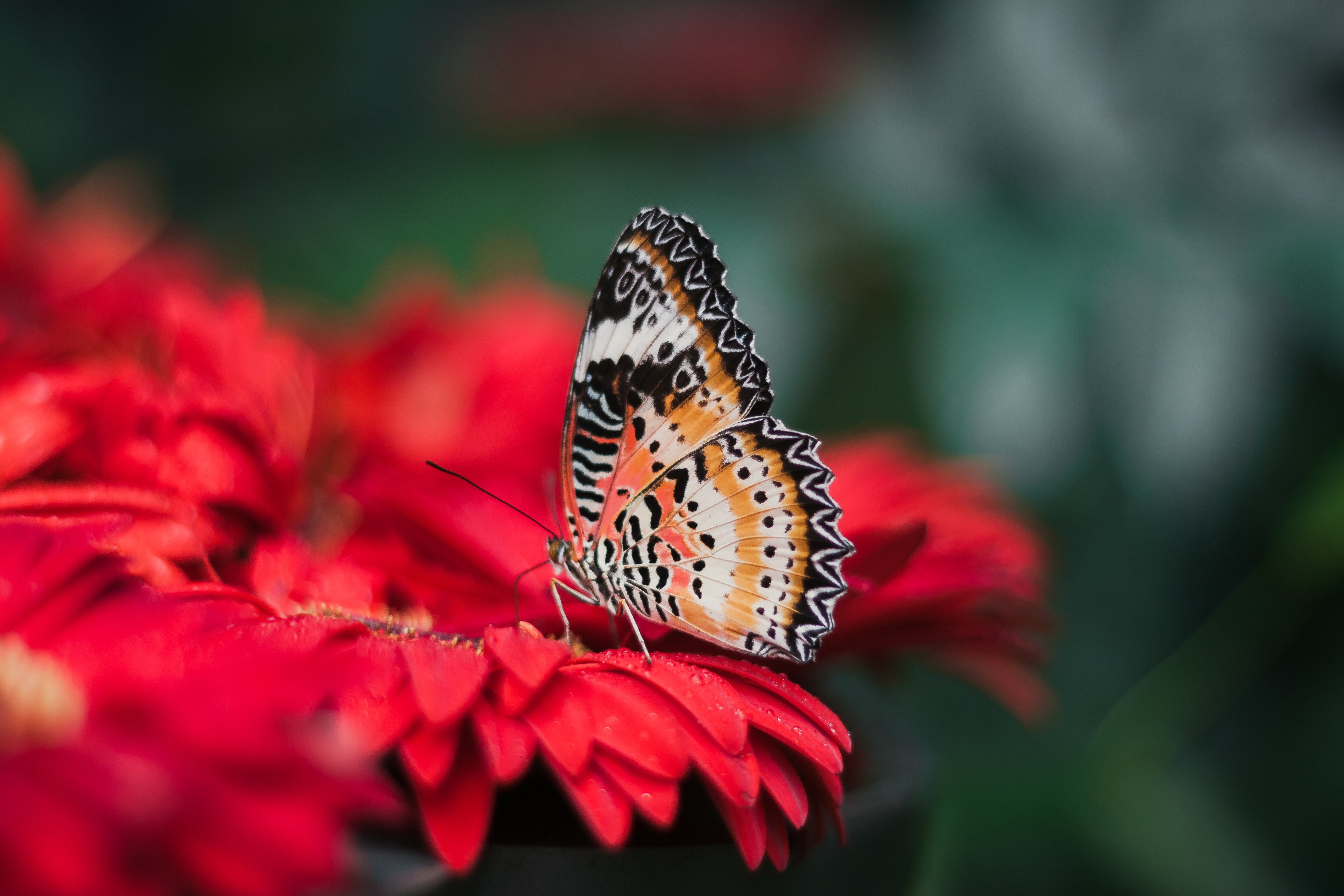 108485 Screensavers and Wallpapers Bright for phone. Download Flower, Macro, Bright, Blur, Smooth, Butterfly, Wings pictures for free