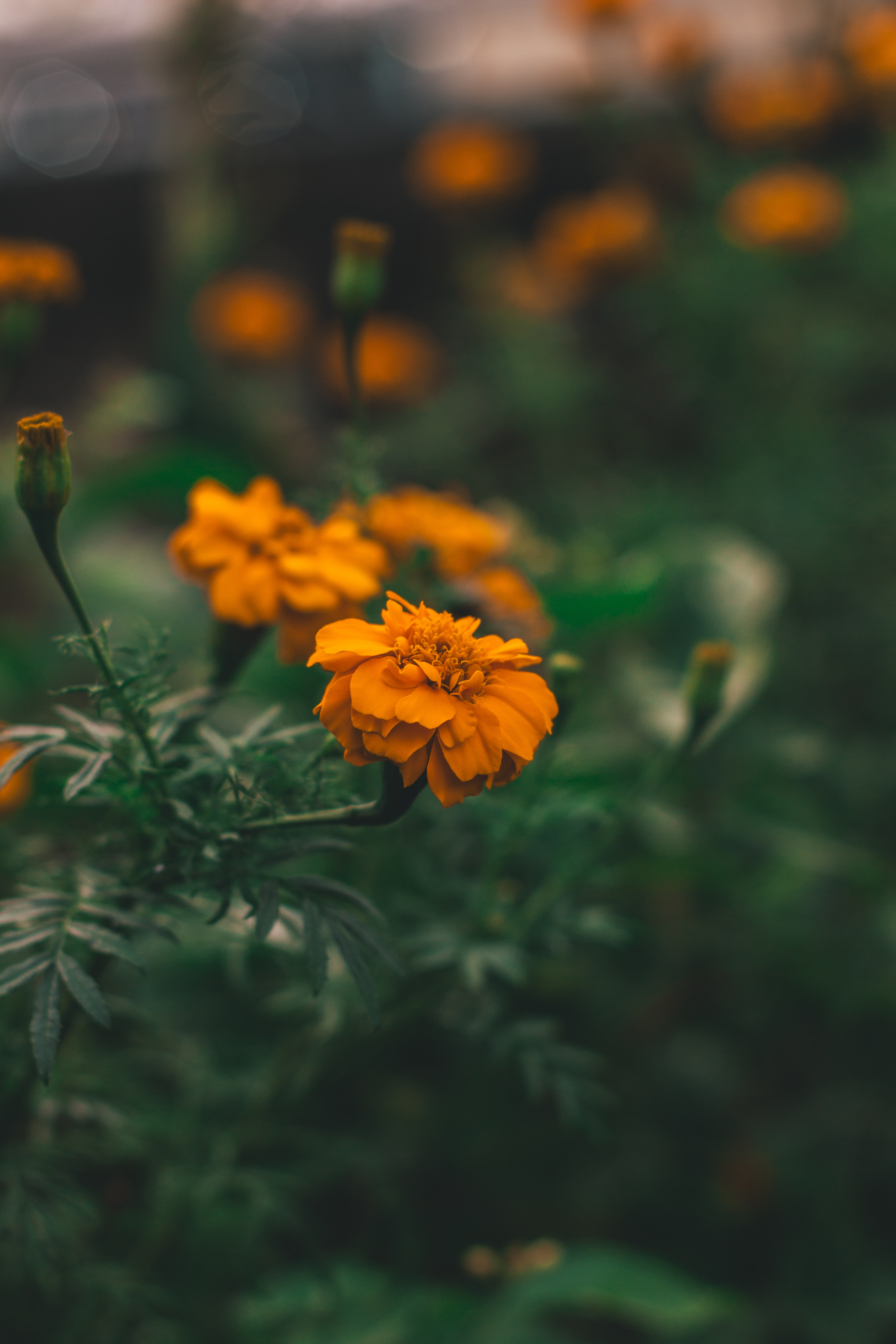 149146 Screensavers and Wallpapers Flower Bed for phone. Download Flowers, Flower, Macro, Blur, Smooth, Flower Bed, Flowerbed pictures for free