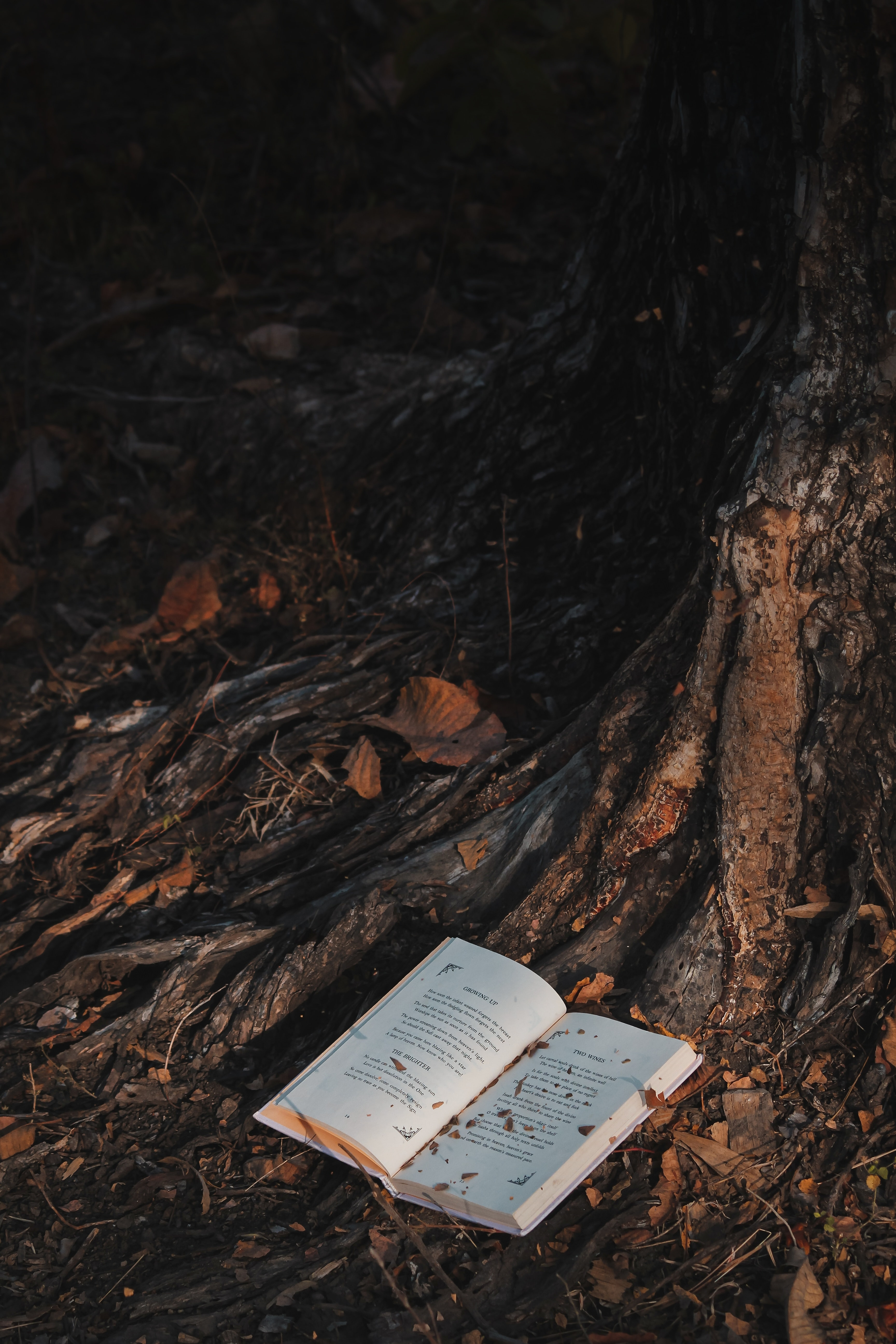 64873 Screensavers and Wallpapers Book for phone. Download Miscellanea, Miscellaneous, Wood, Forest, Tree, Book pictures for free