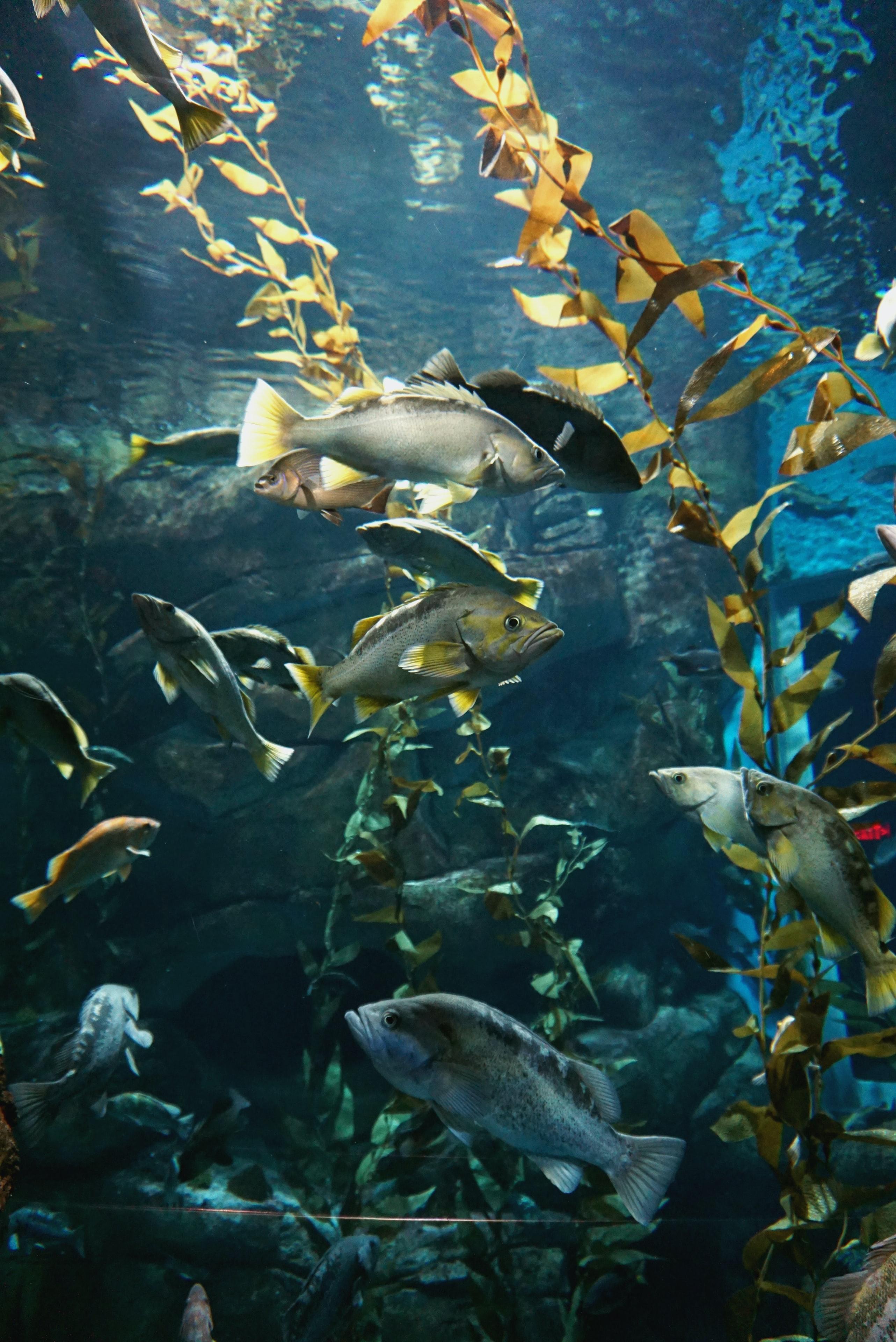 82485 Заставки и Обои Рыбы на телефон. Скачать Рыбы, Животные, Вода, Аквариум, Водоросли картинки бесплатно