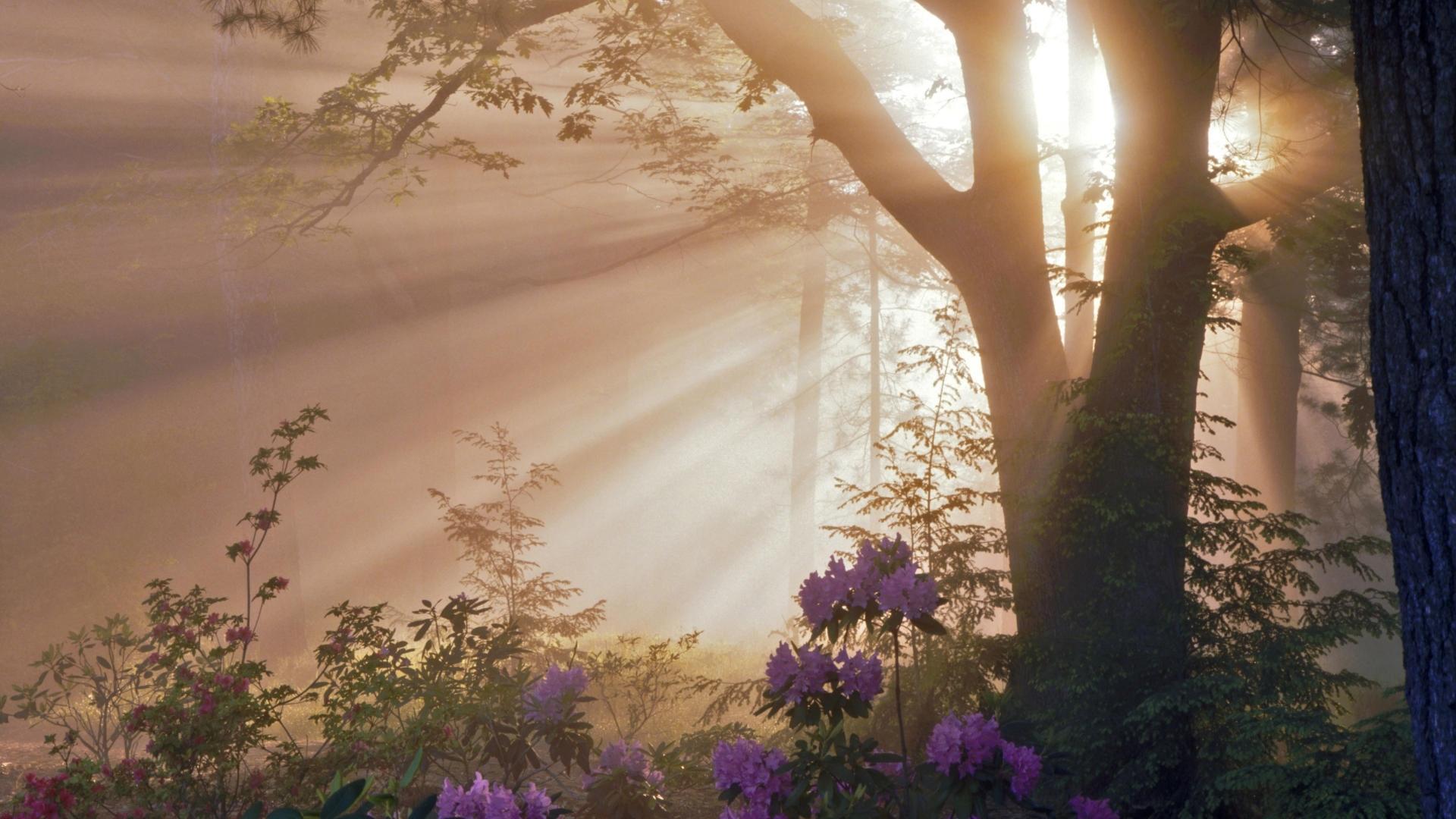 Скачать картинку Солнце, Деревья, Растения, Цветы в телефон бесплатно.