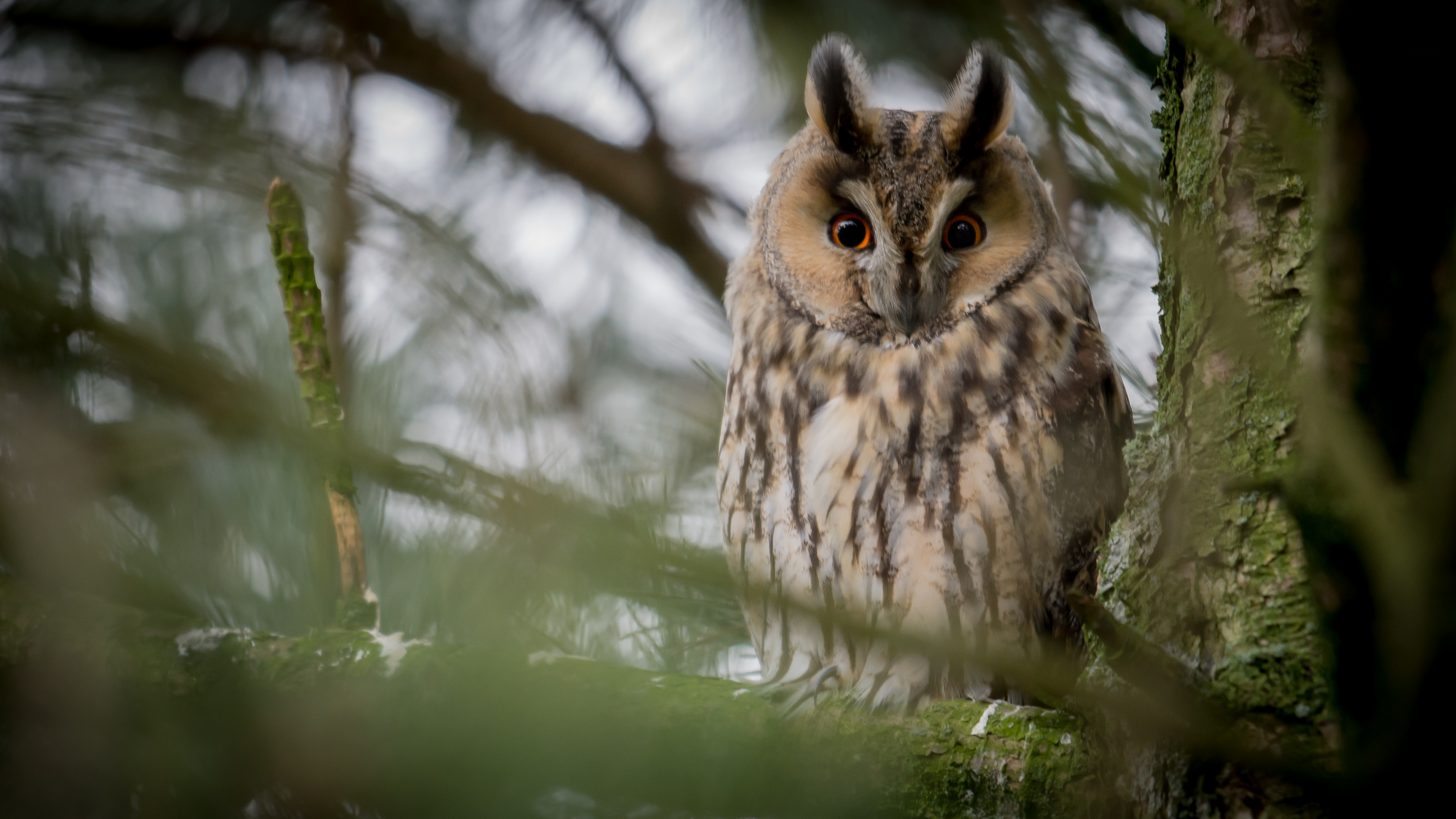 142850 download wallpaper Animals, Owl, Eagle Owl, Bird, Branches, Branch, Feather screensavers and pictures for free