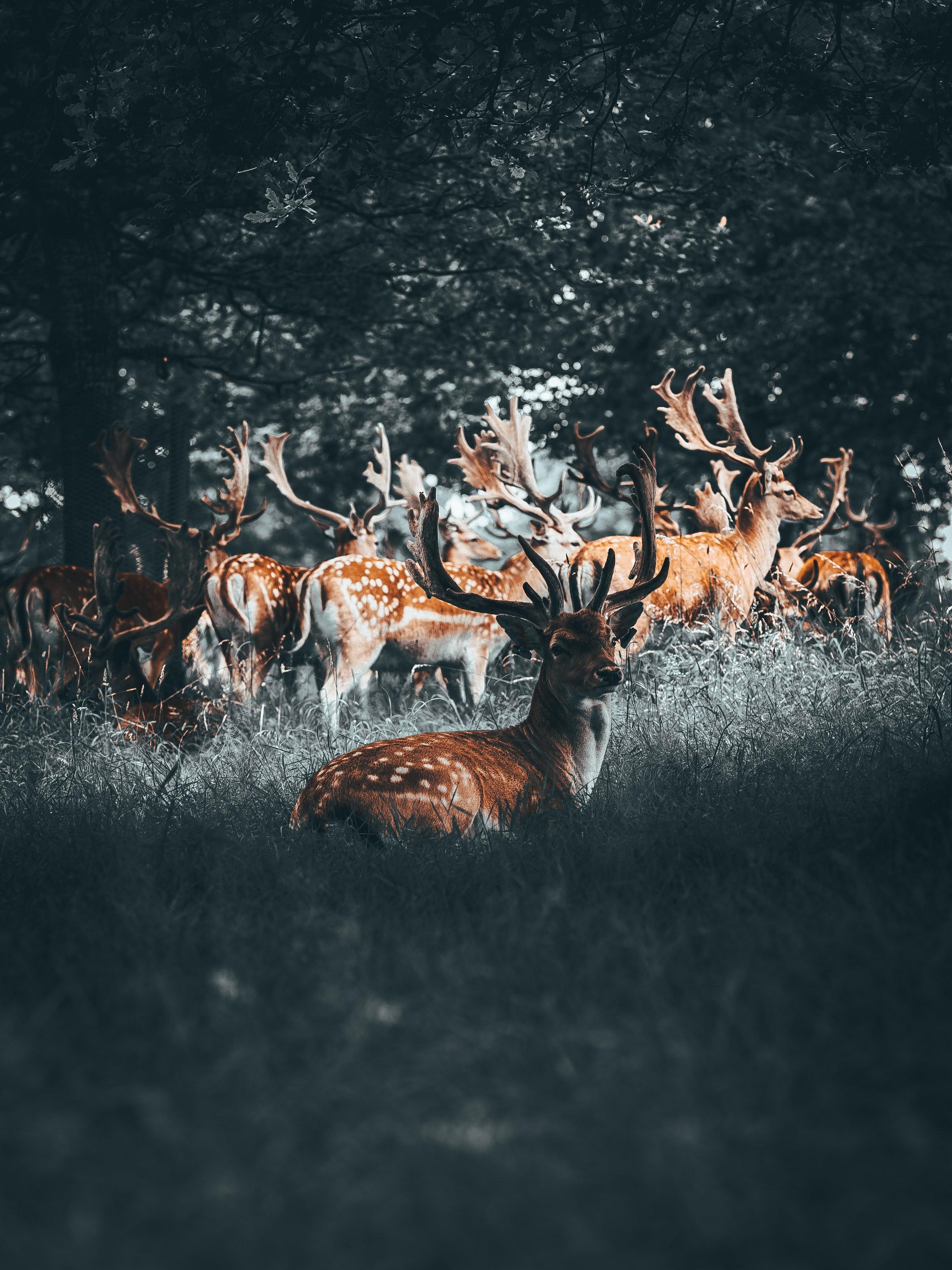 114372 download wallpaper Animals, Deers, Deer, Horns, Herd, Forest screensavers and pictures for free