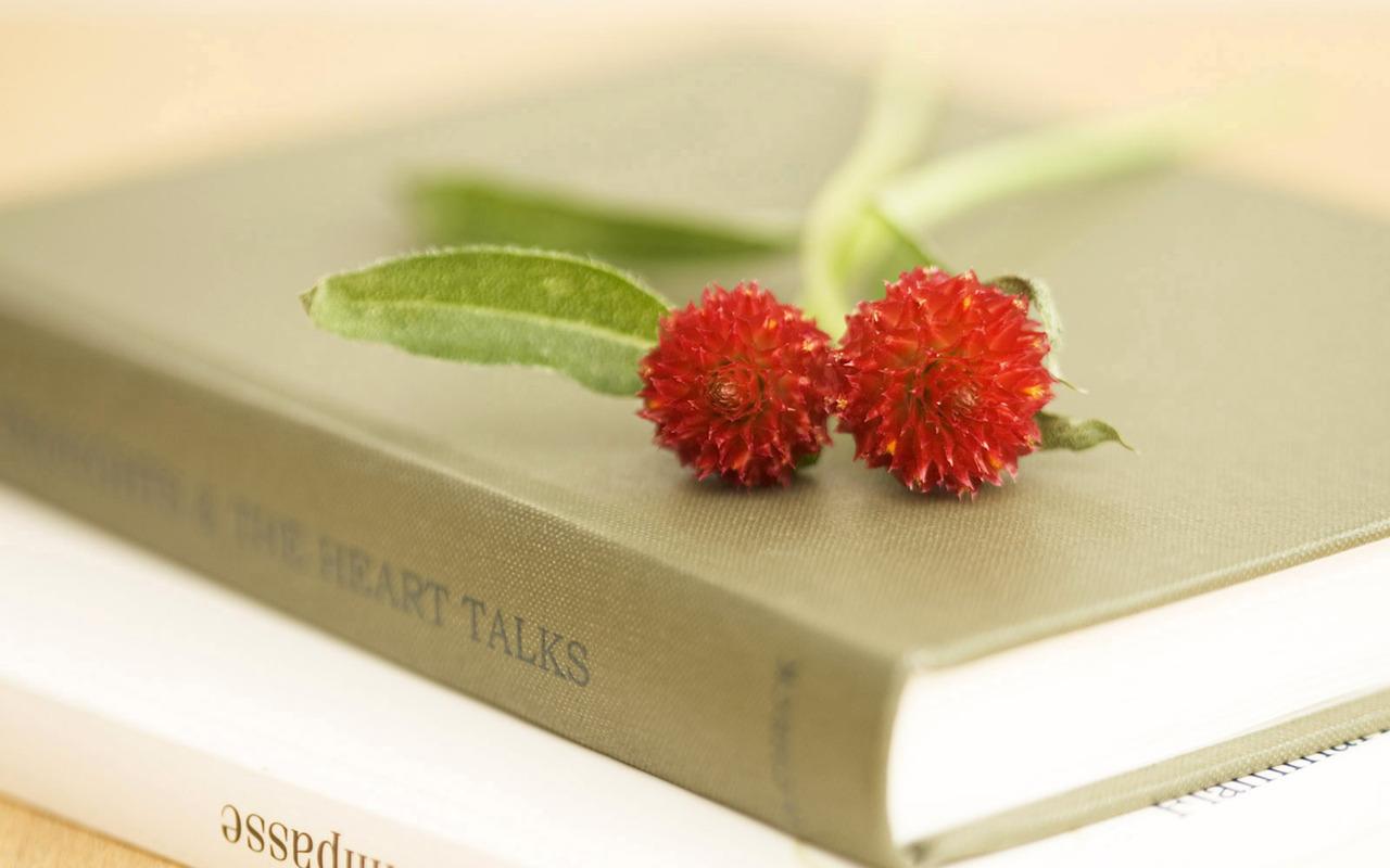 14525 скачать обои Растения, Цветы - заставки и картинки бесплатно