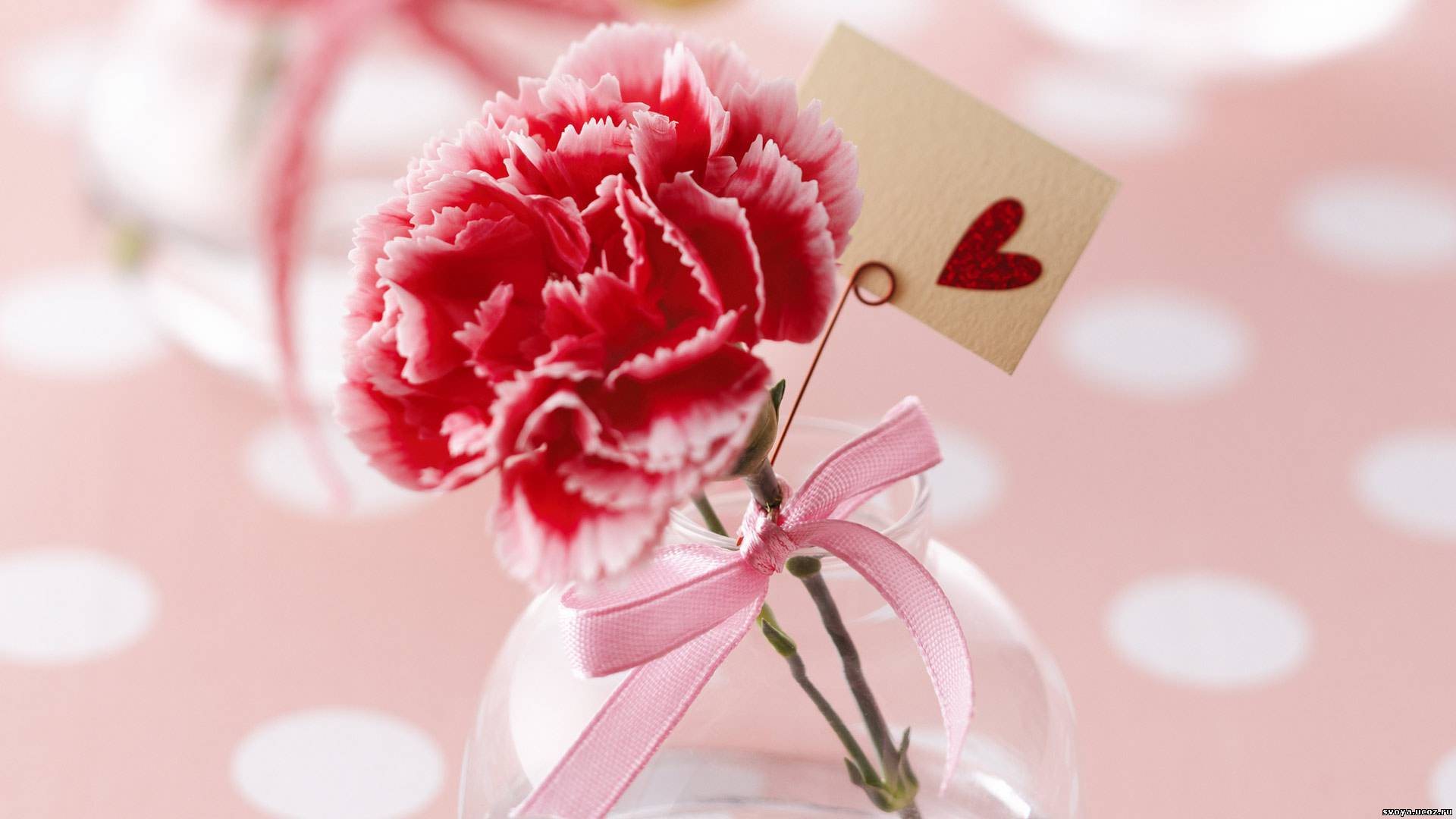 16966 download wallpaper Holidays, Plants, Flowers, Hearts, Love, Valentine's Day, Carnations screensavers and pictures for free