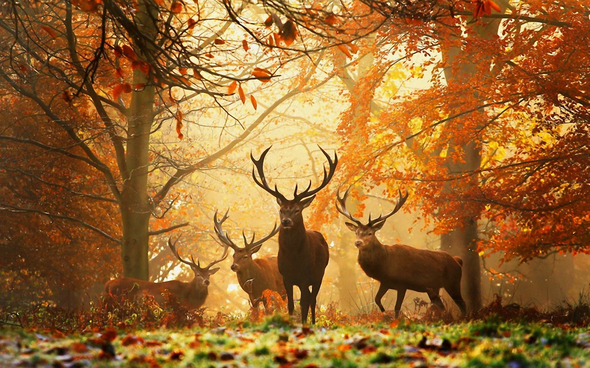 20525 download wallpaper Animals, Autumn, Deers screensavers and pictures for free