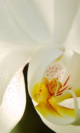 41552 descargar fondo de pantalla Plantas, Flores: protectores de pantalla e imágenes gratis