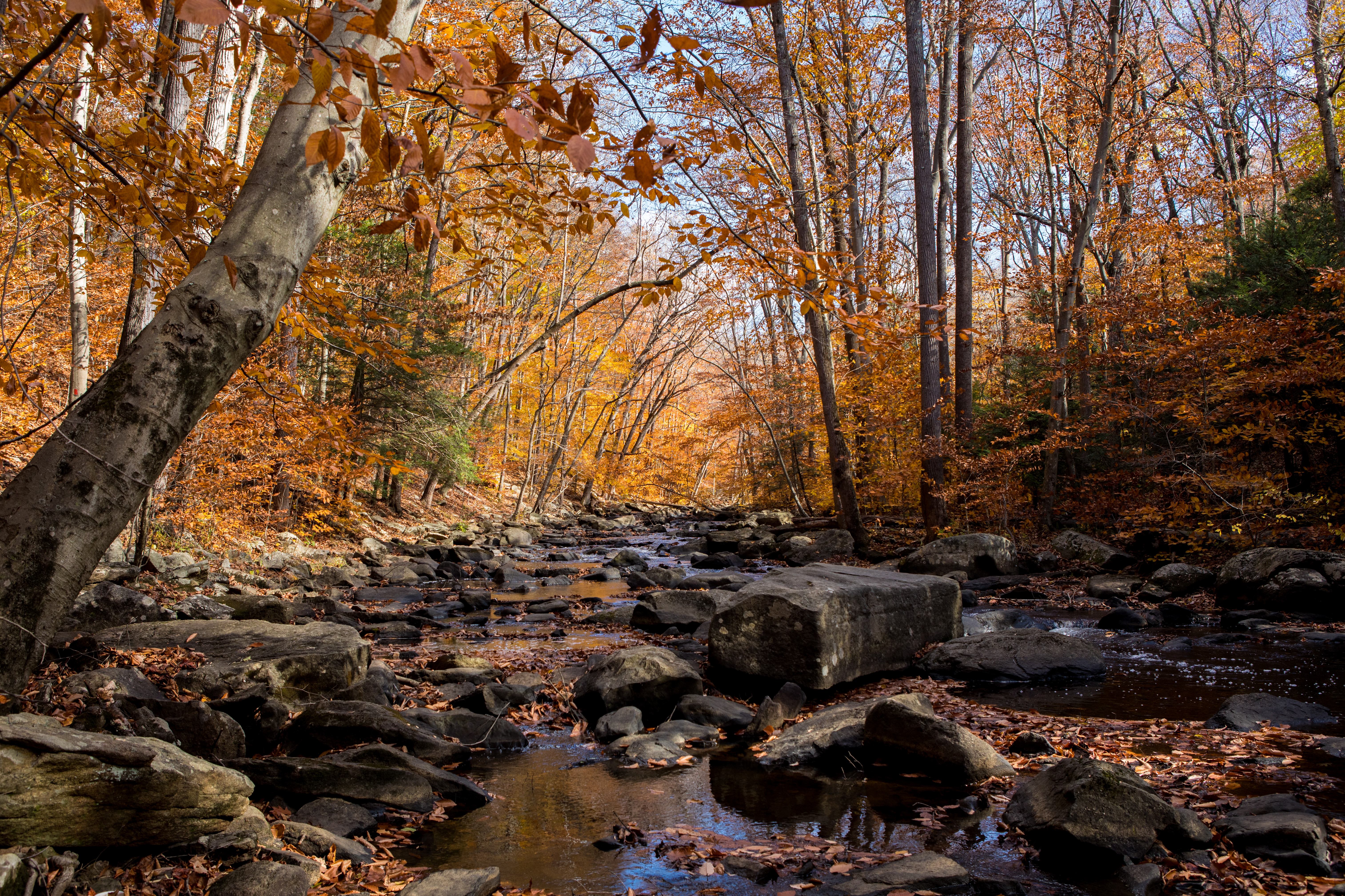 118814 download wallpaper Nature, Rivers, Stones, Autumn, Creek, Brook screensavers and pictures for free