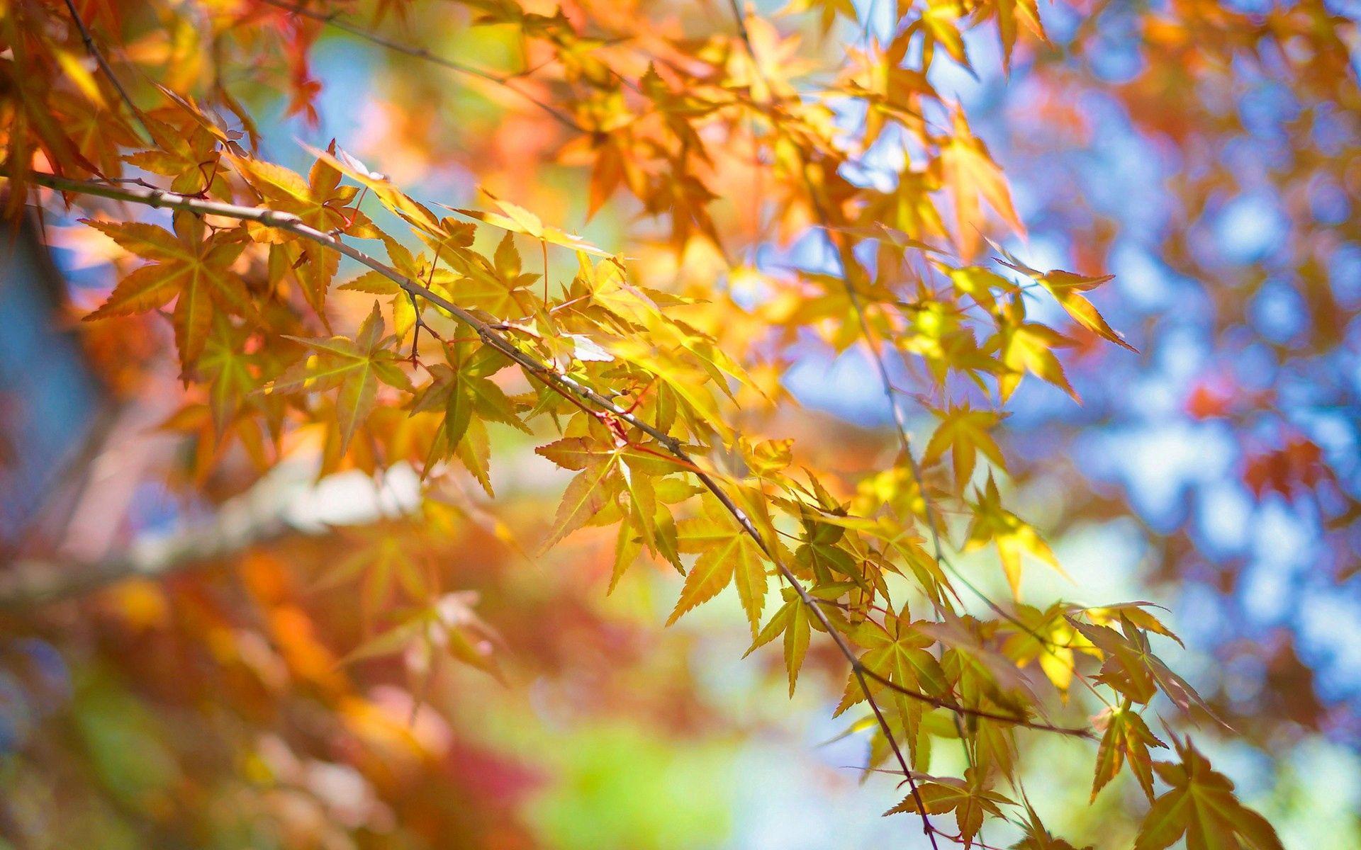 100106 скачать обои Природа, Листья, Осень, Дерево, Ветка - заставки и картинки бесплатно