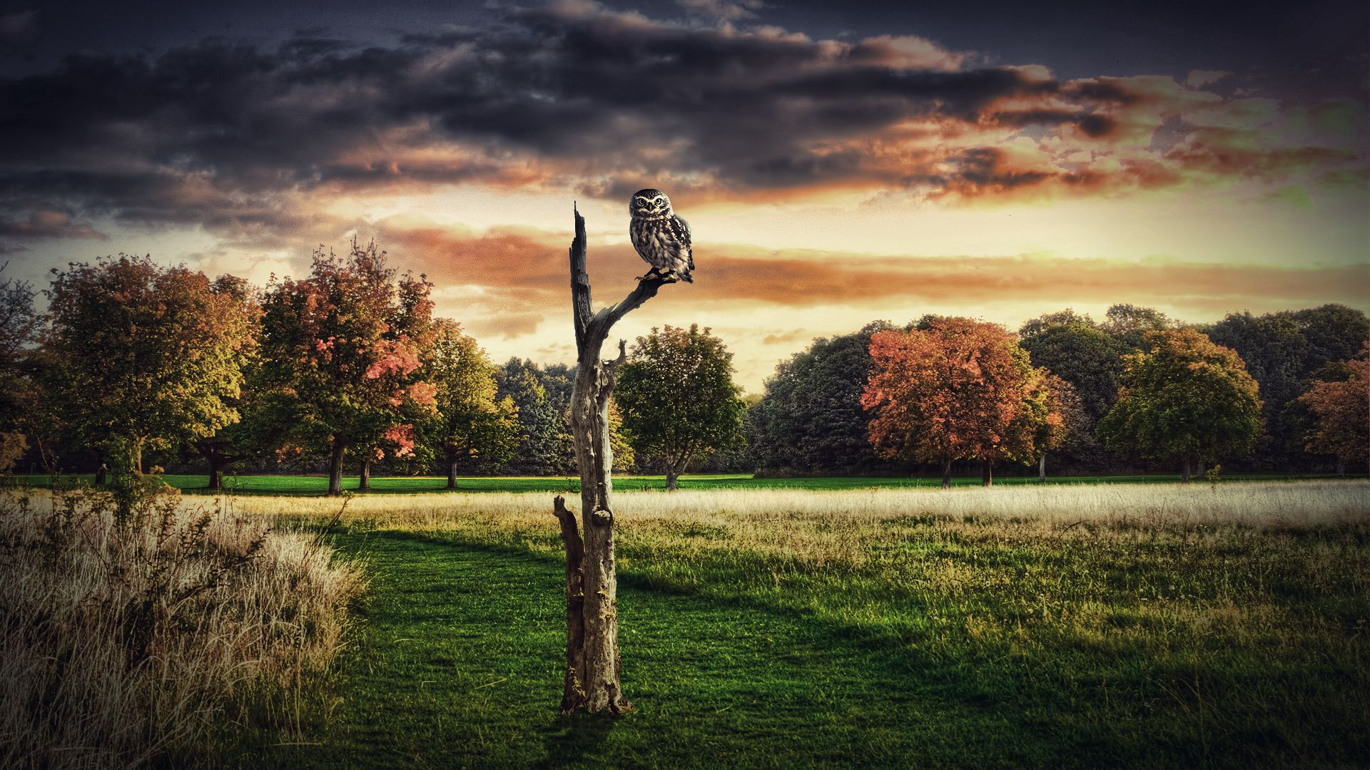 158035 Screensavers and Wallpapers Sit for phone. Download Animals, Grass, Owl, Wood, Sit, Tree pictures for free