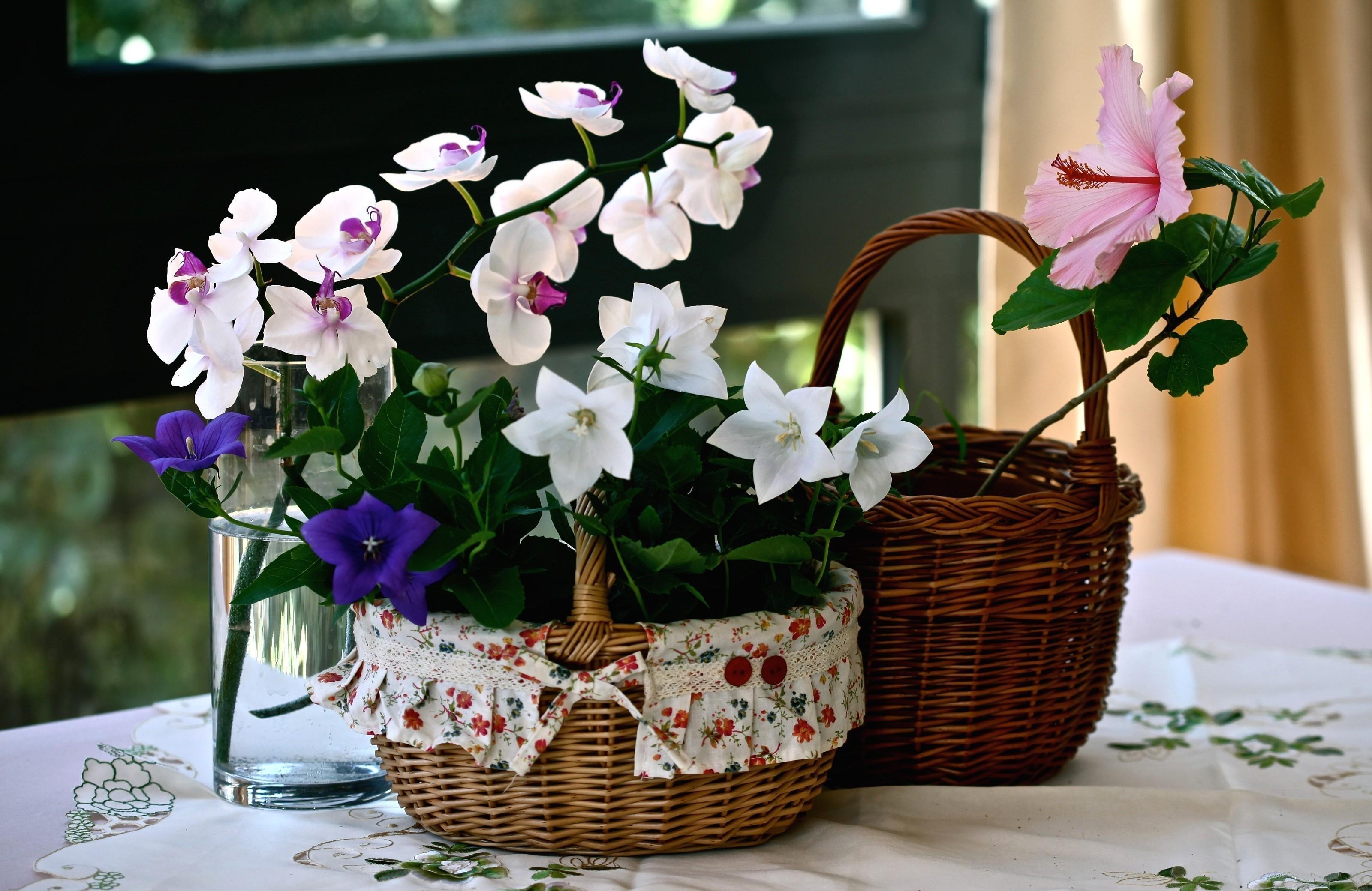 95973 скачать обои Цветы, Орхидея, Колокольчики, Гибискус, Корзины, Скатерть, Стакан - заставки и картинки бесплатно