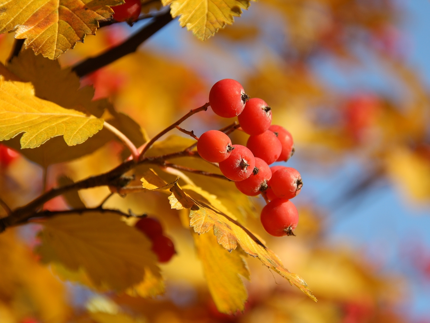 Популярные картинки Осень в HD качестве