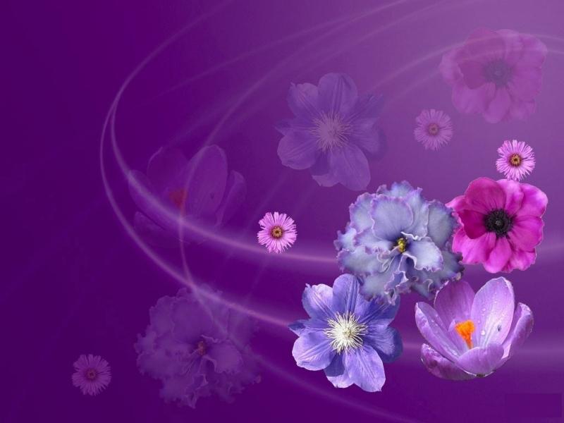 40487 Hintergrundbild herunterladen Blumen, Hintergrund - Bildschirmschoner und Bilder kostenlos