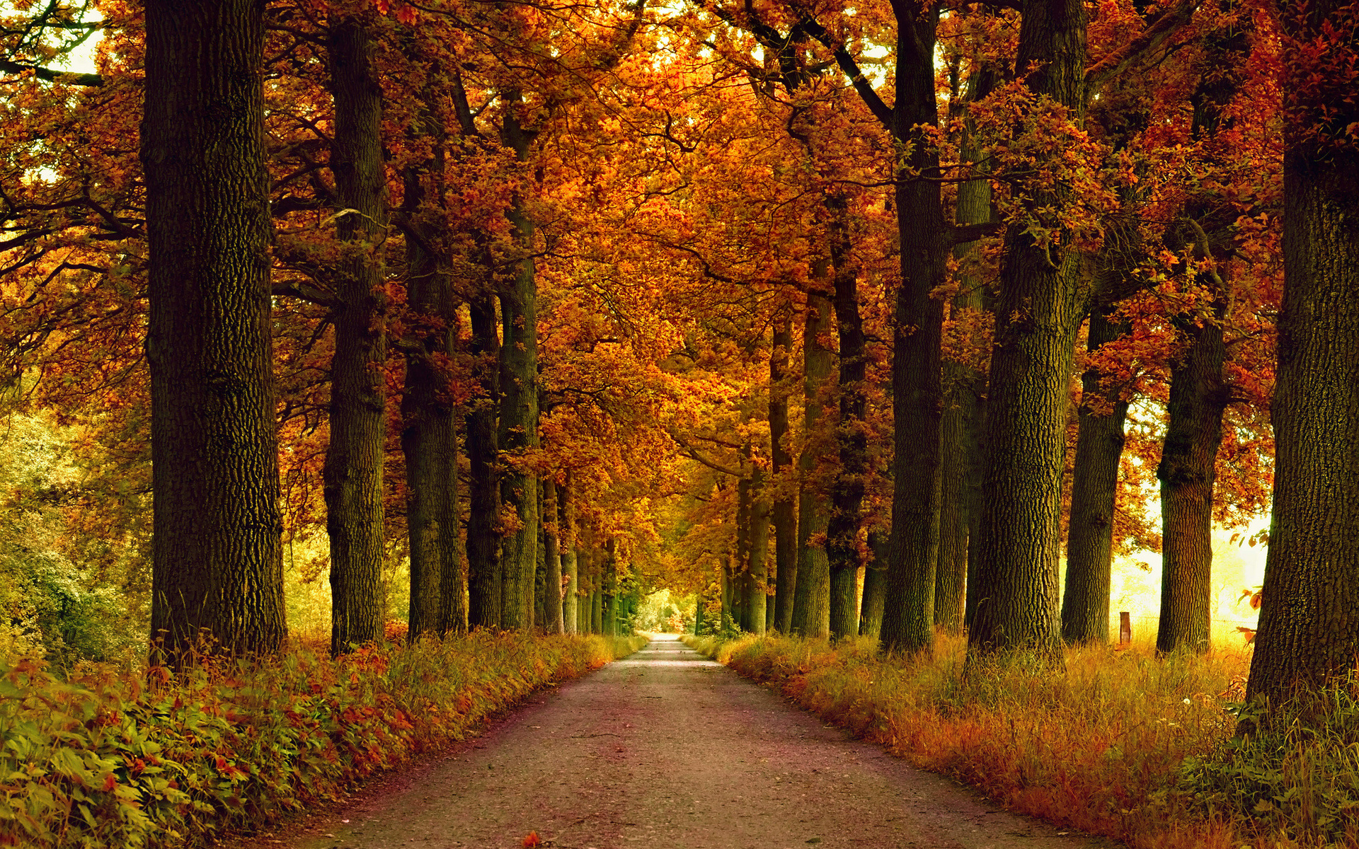 31124 download wallpaper Landscape, Trees, Roads, Autumn screensavers and pictures for free