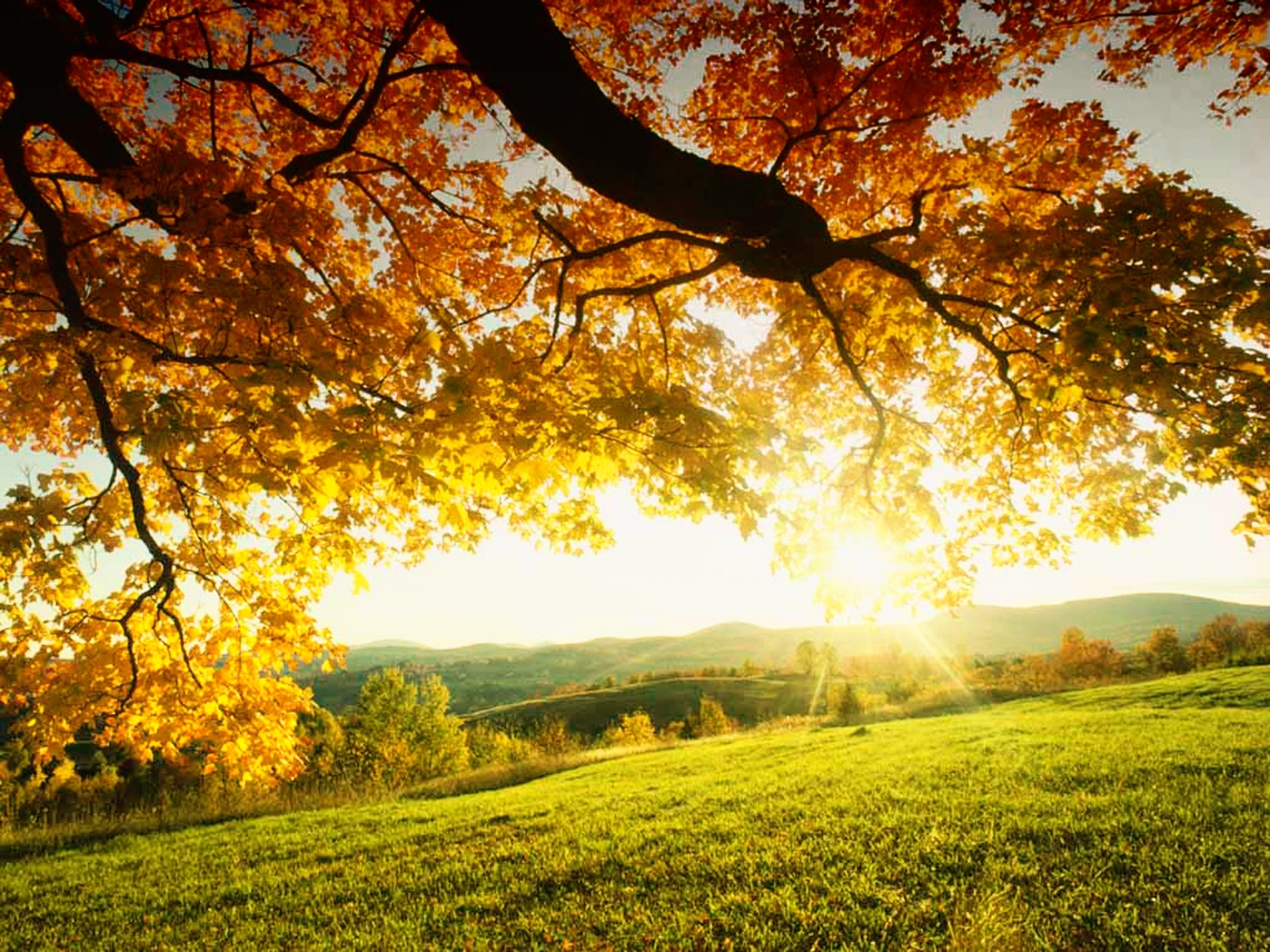 4505 download wallpaper Landscape, Trees, Autumn, Sun screensavers and pictures for free
