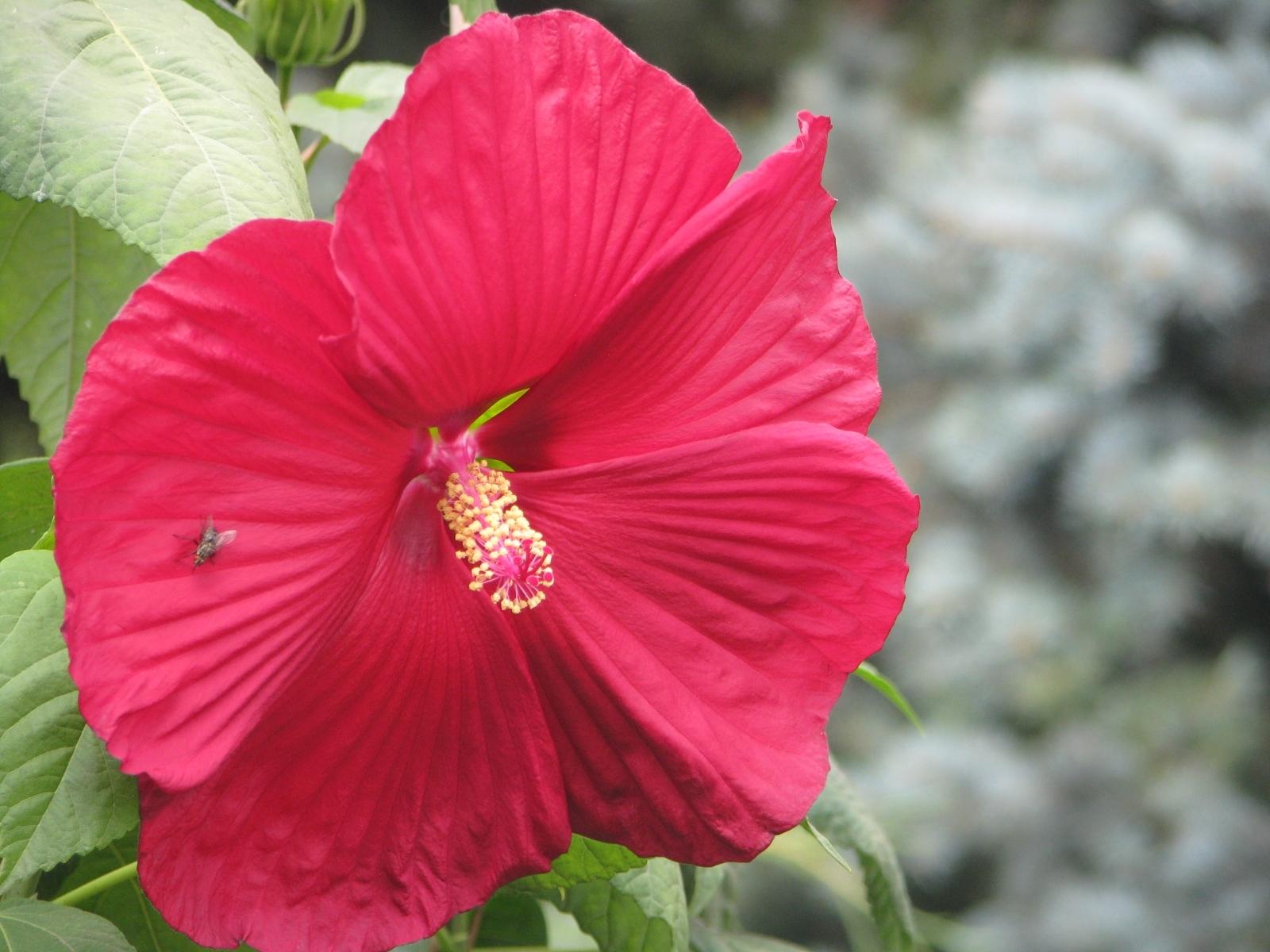 9558 descargar fondo de pantalla Plantas, Flores: protectores de pantalla e imágenes gratis