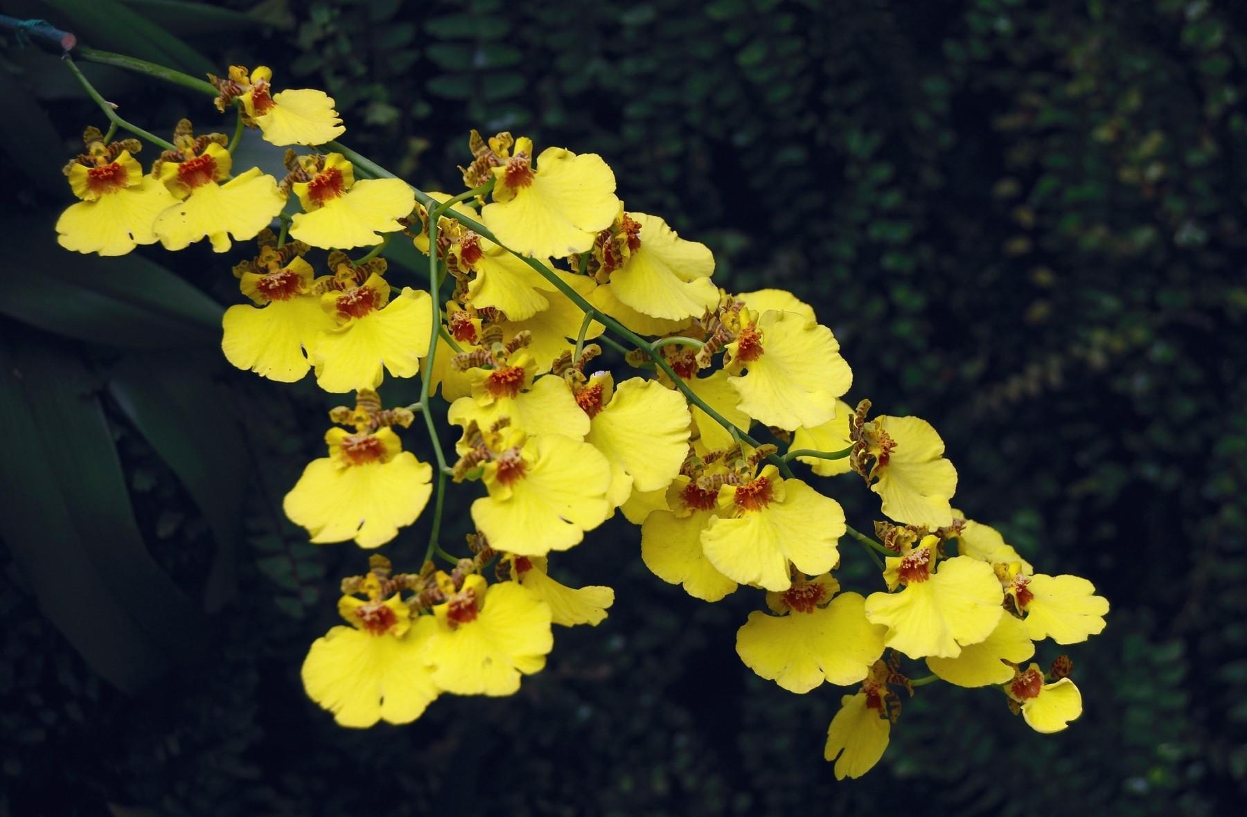 137088 download wallpaper Branch, Flowers, Sharpness, Orchid screensavers and pictures for free