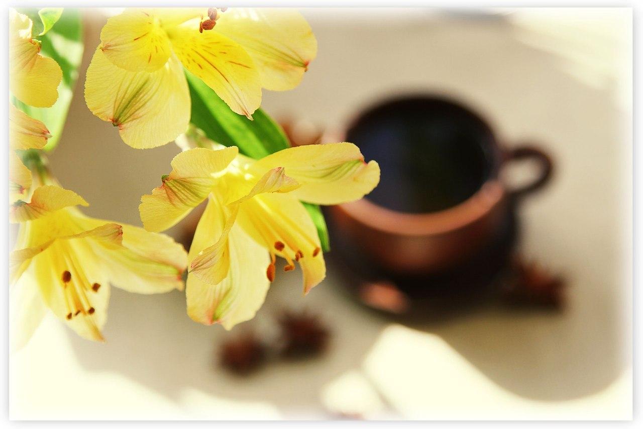 15085 descargar fondo de pantalla Plantas, Flores, Fondo: protectores de pantalla e imágenes gratis