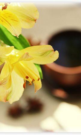 15085 скачать обои Растения, Цветы, Фон - заставки и картинки бесплатно