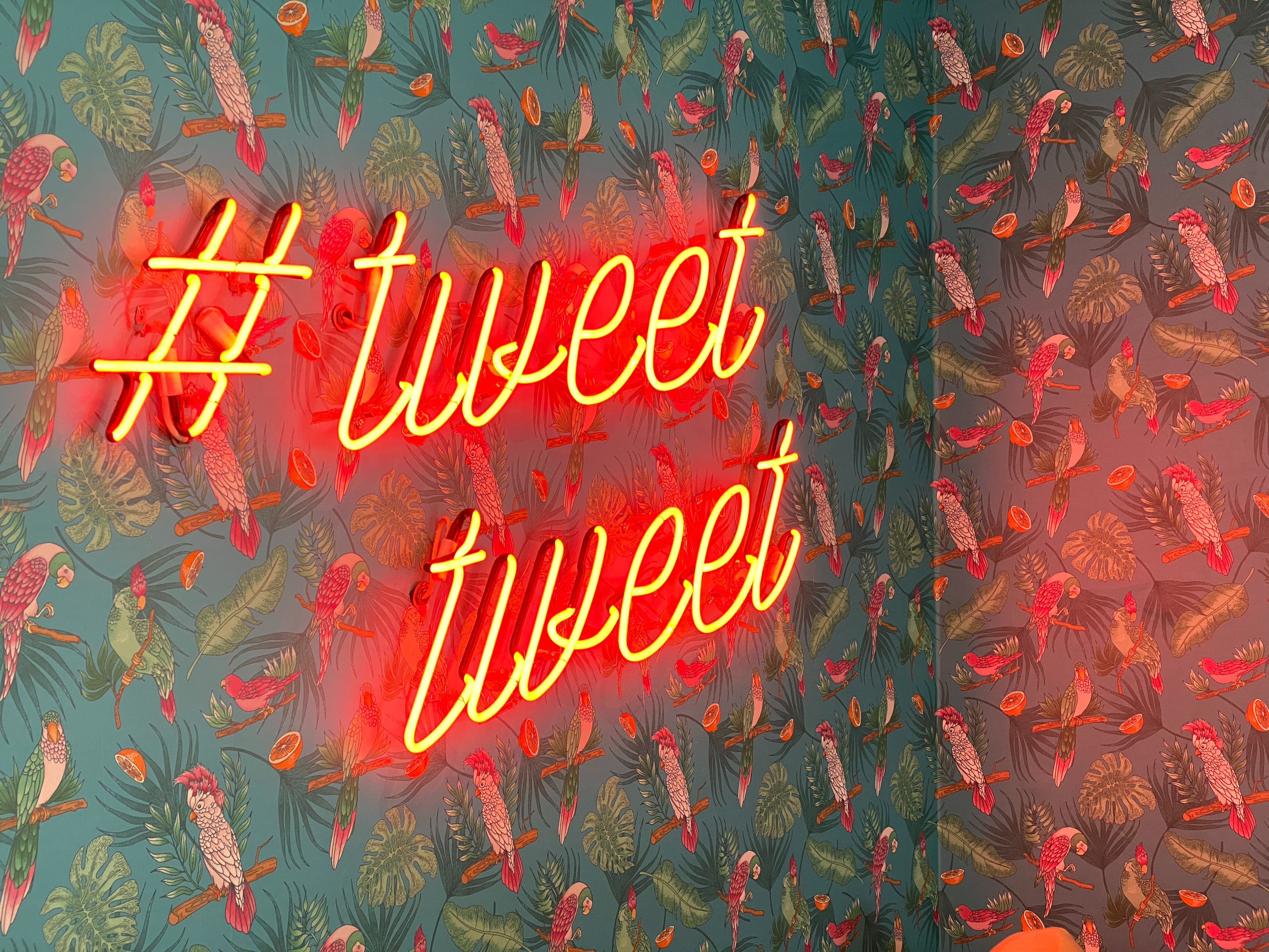 147229 download wallpaper Words, Twitter, Neon, Inscription, Pattern, Birds screensavers and pictures for free