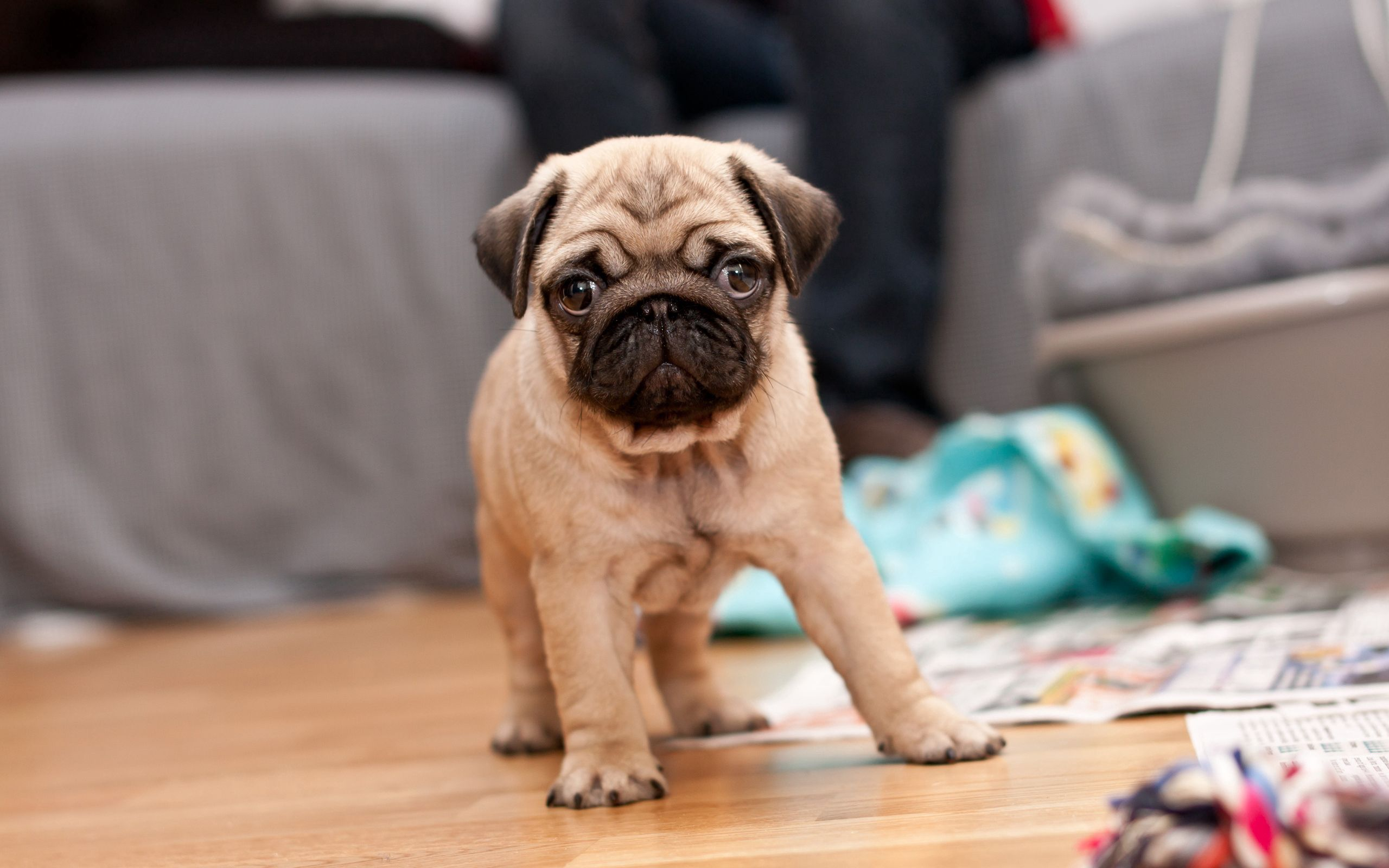 73248 download wallpaper Animals, Puppy, Muzzle, To Stand, Stand, Expectation, Waiting, Dog screensavers and pictures for free