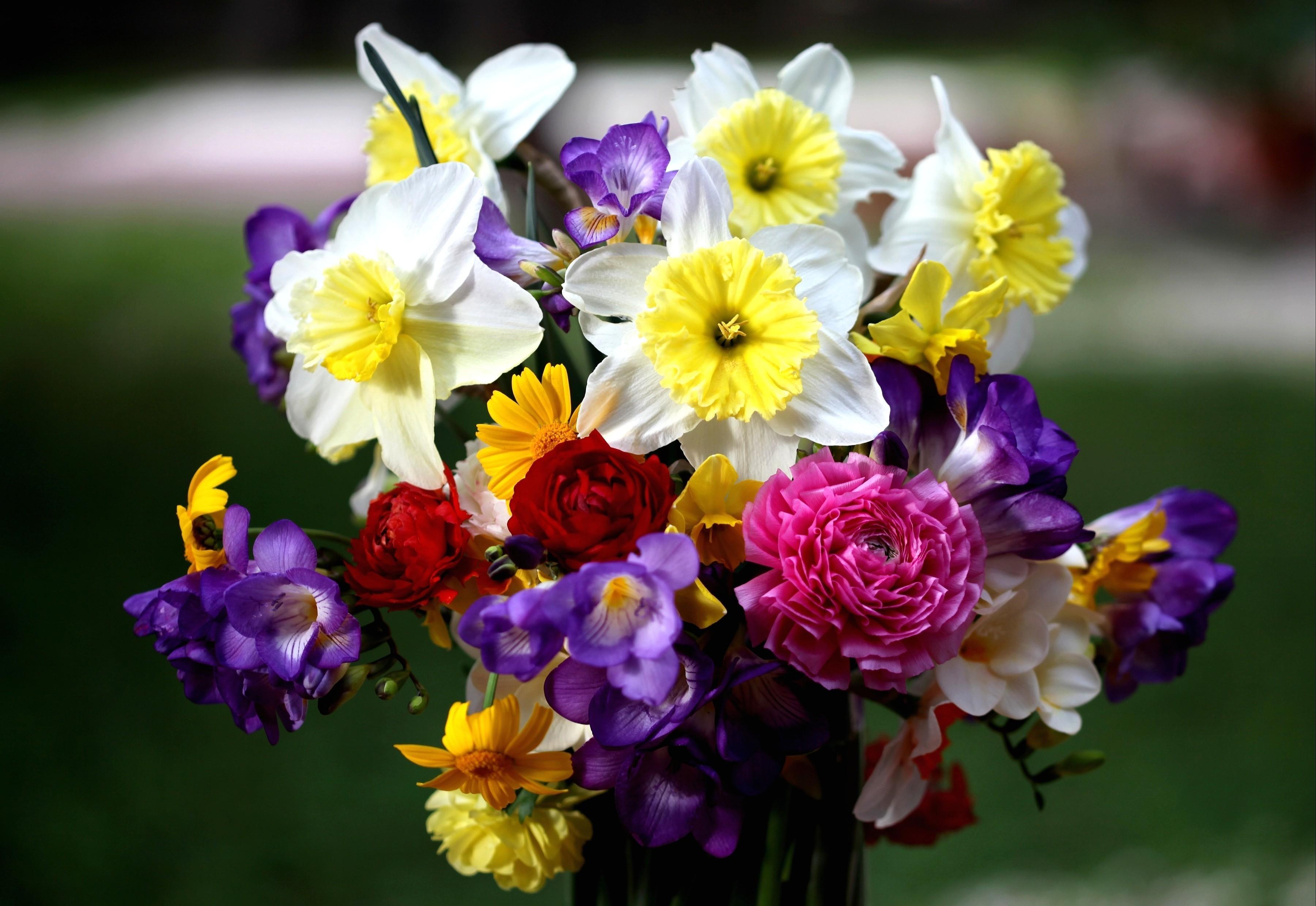 91358 Заставки и Обои Нарциссы на телефон. Скачать Розы, Цветы, Нарциссы, Букет, Фрезия картинки бесплатно