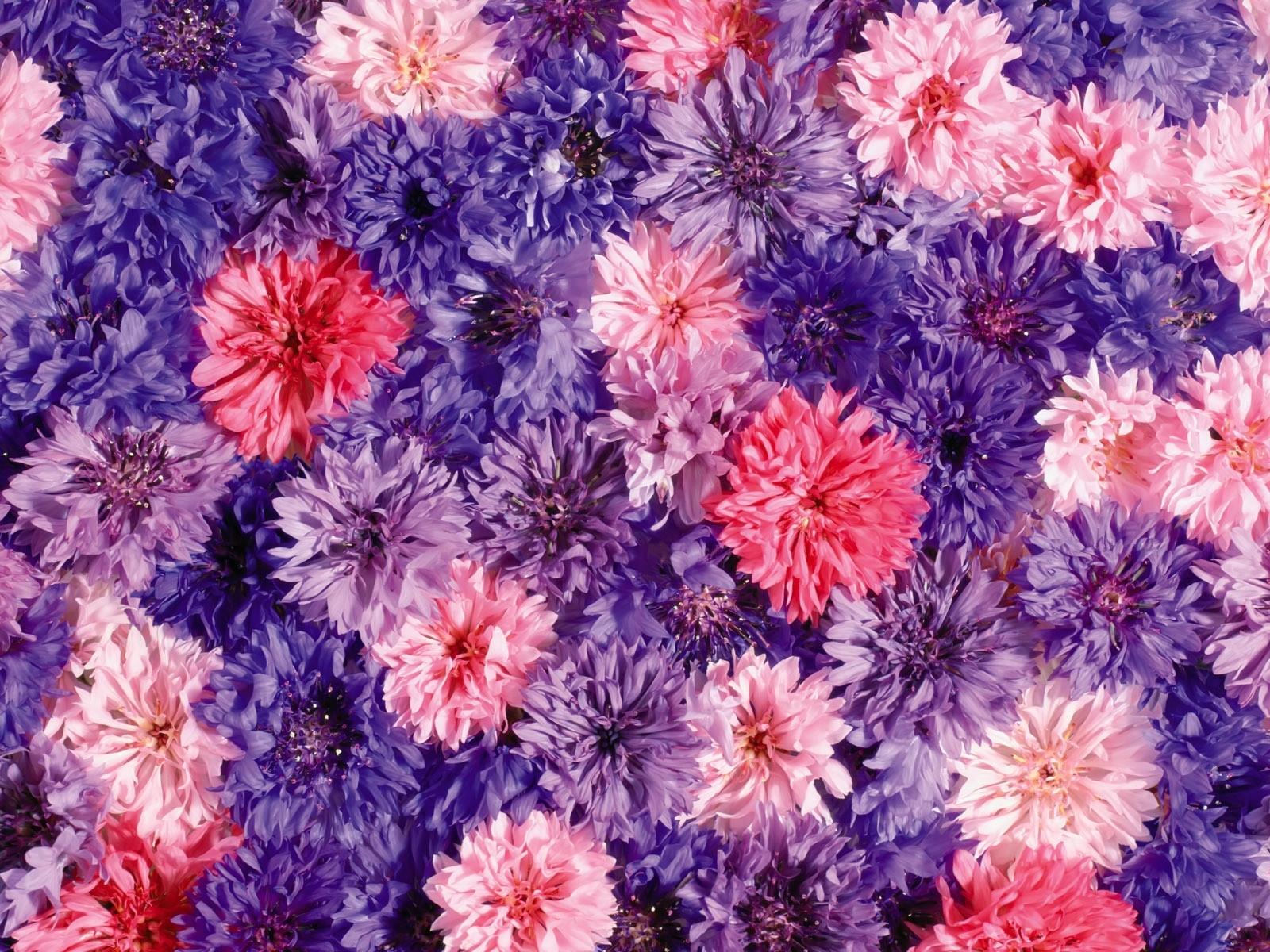 10262 скачать обои Растения, Цветы, Фон - заставки и картинки бесплатно
