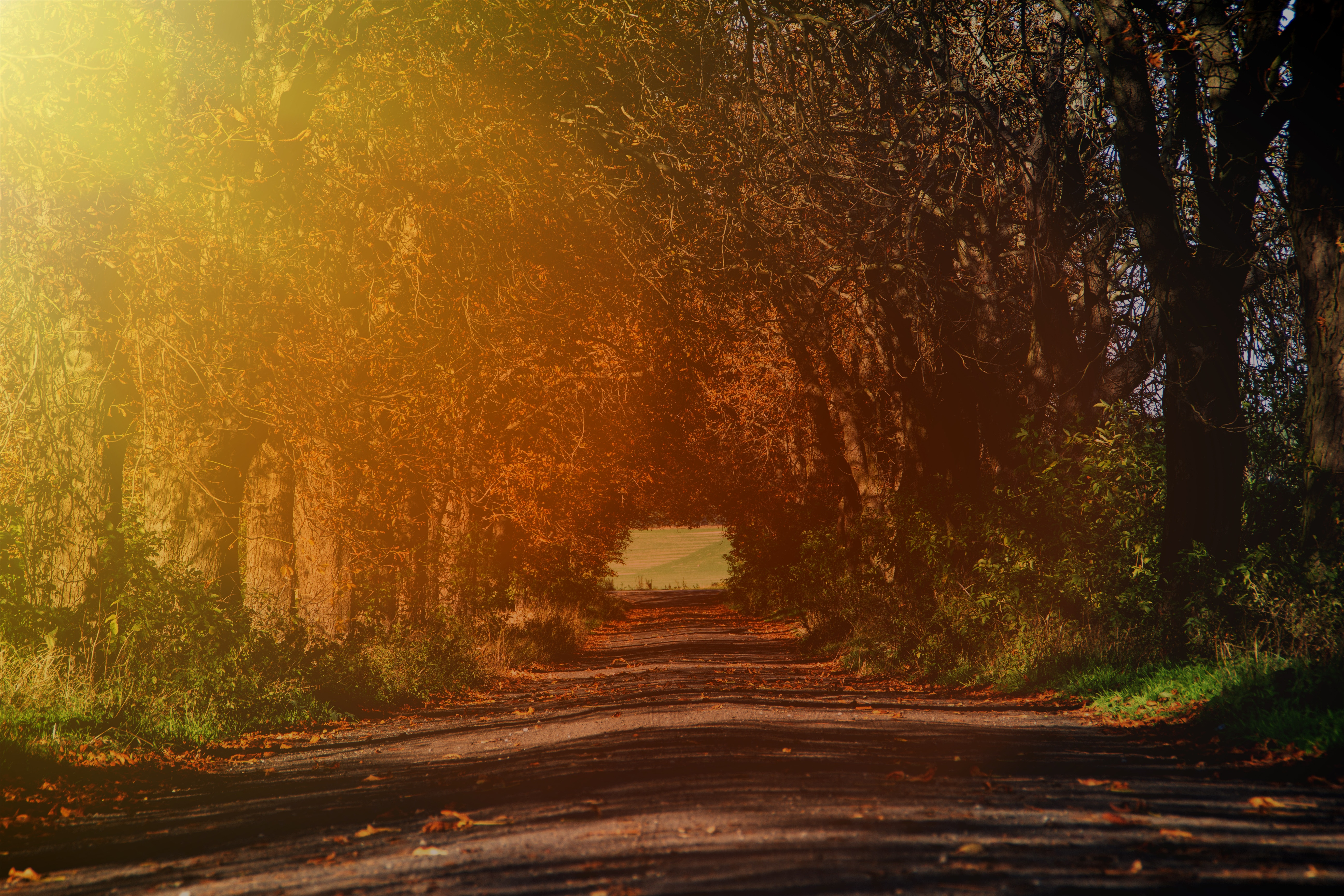 142252 download wallpaper Nature, Road, Branches, Autumn, Sunlight, Trees screensavers and pictures for free