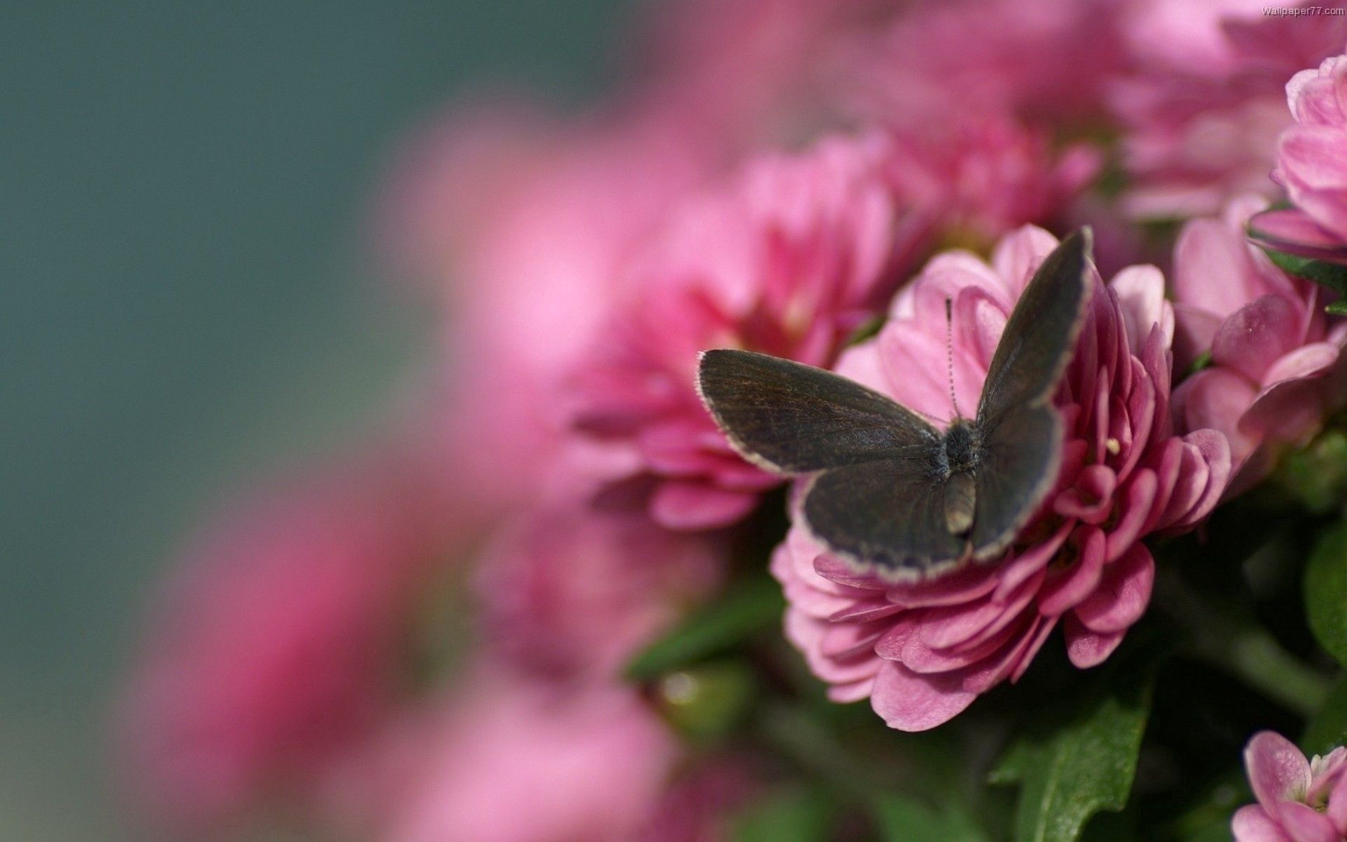 147294 Screensavers and Wallpapers Petals for phone. Download Flower, Macro, Petals, Butterfly, Wings pictures for free