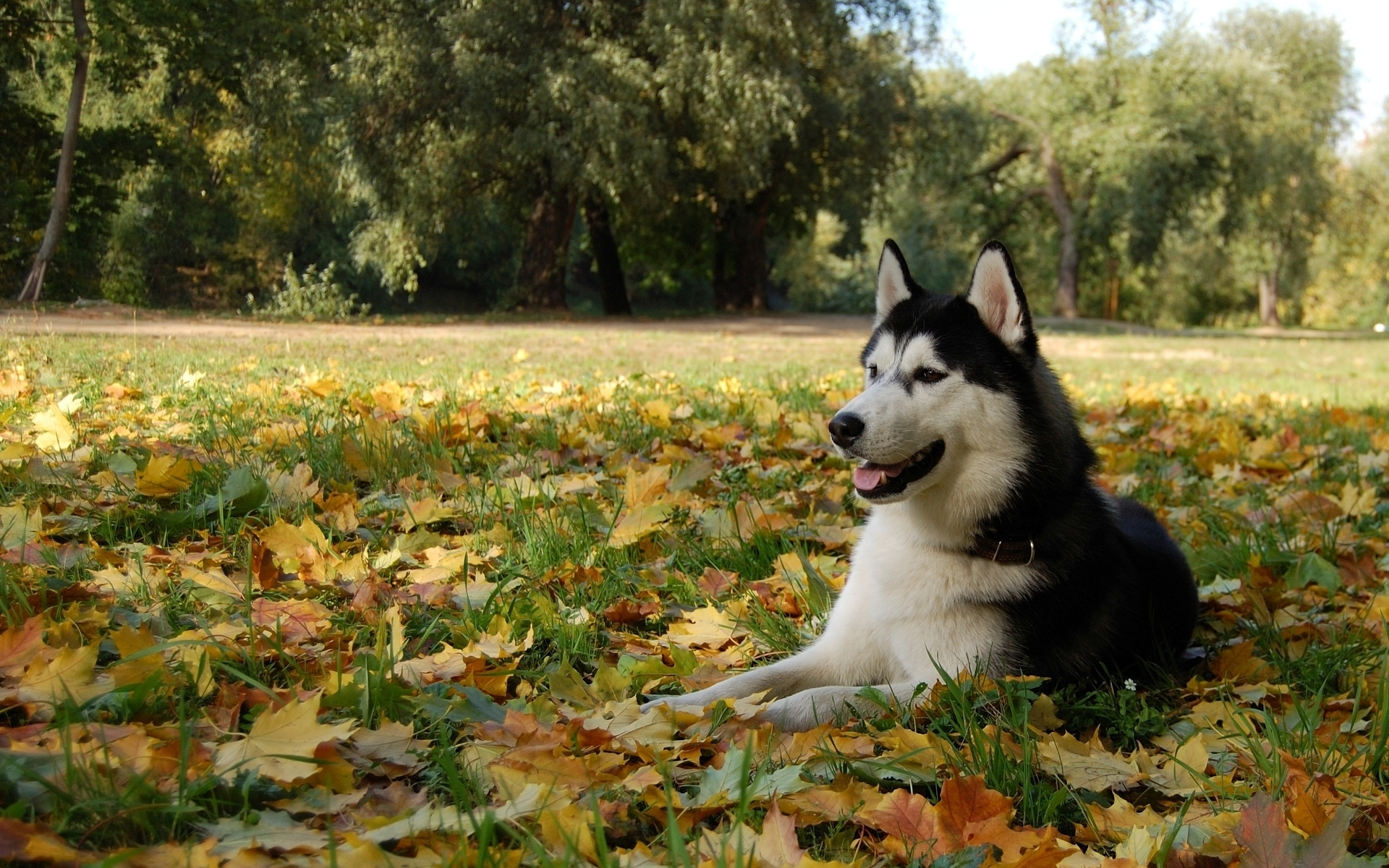 28858 download wallpaper Animals, Dogs screensavers and pictures for free