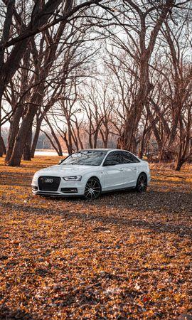 Скачать бесплатно картинку 98747: Тачки (Cars), Ауди (Audi), Автомобиль, Белый, Деревья обои на телефон