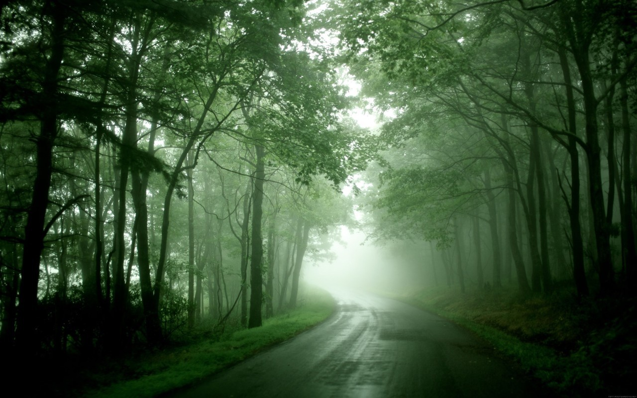 19605 скачать обои Пейзаж, Деревья, Дороги - заставки и картинки бесплатно