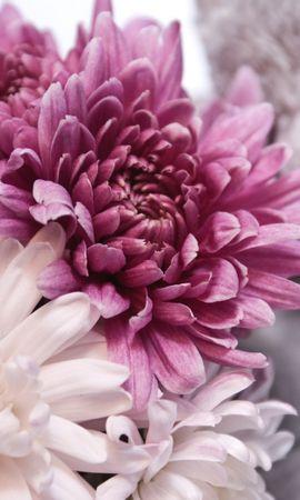 26382 скачать обои Растения, Цветы - заставки и картинки бесплатно