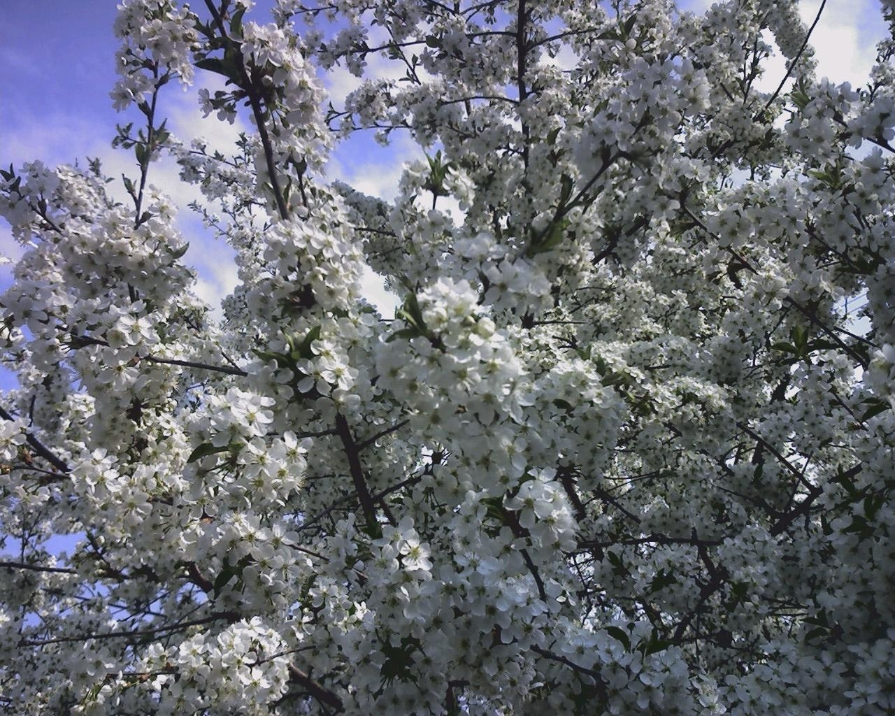 3558 скачать обои Растения, Цветы, Деревья - заставки и картинки бесплатно