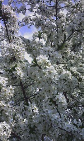 3558 descargar fondo de pantalla Plantas, Flores, Árboles: protectores de pantalla e imágenes gratis