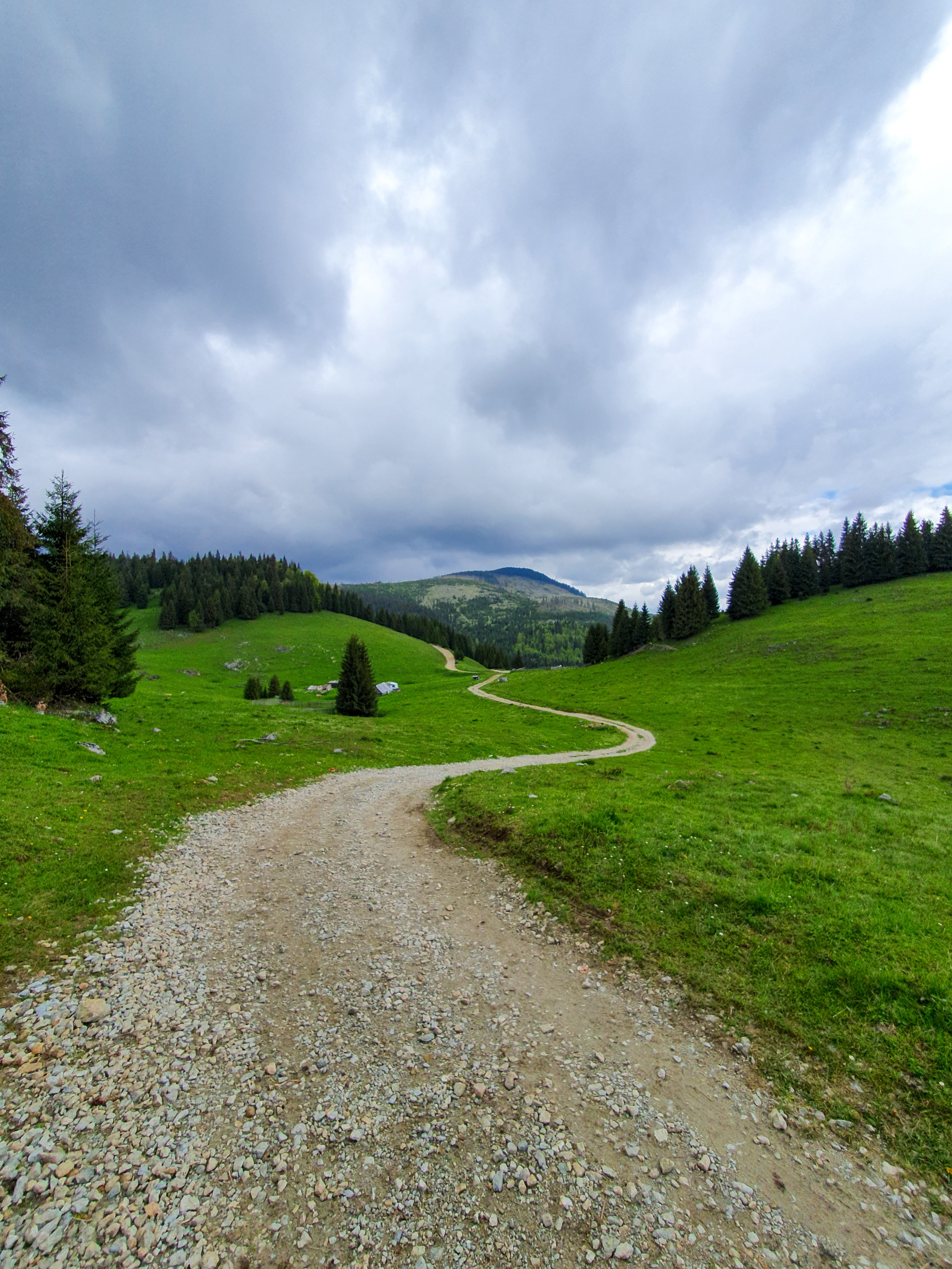 102559 Screensavers and Wallpapers Dahl for phone. Download Nature, Trees, Grass, Mountain, Path, Dahl, Distance pictures for free