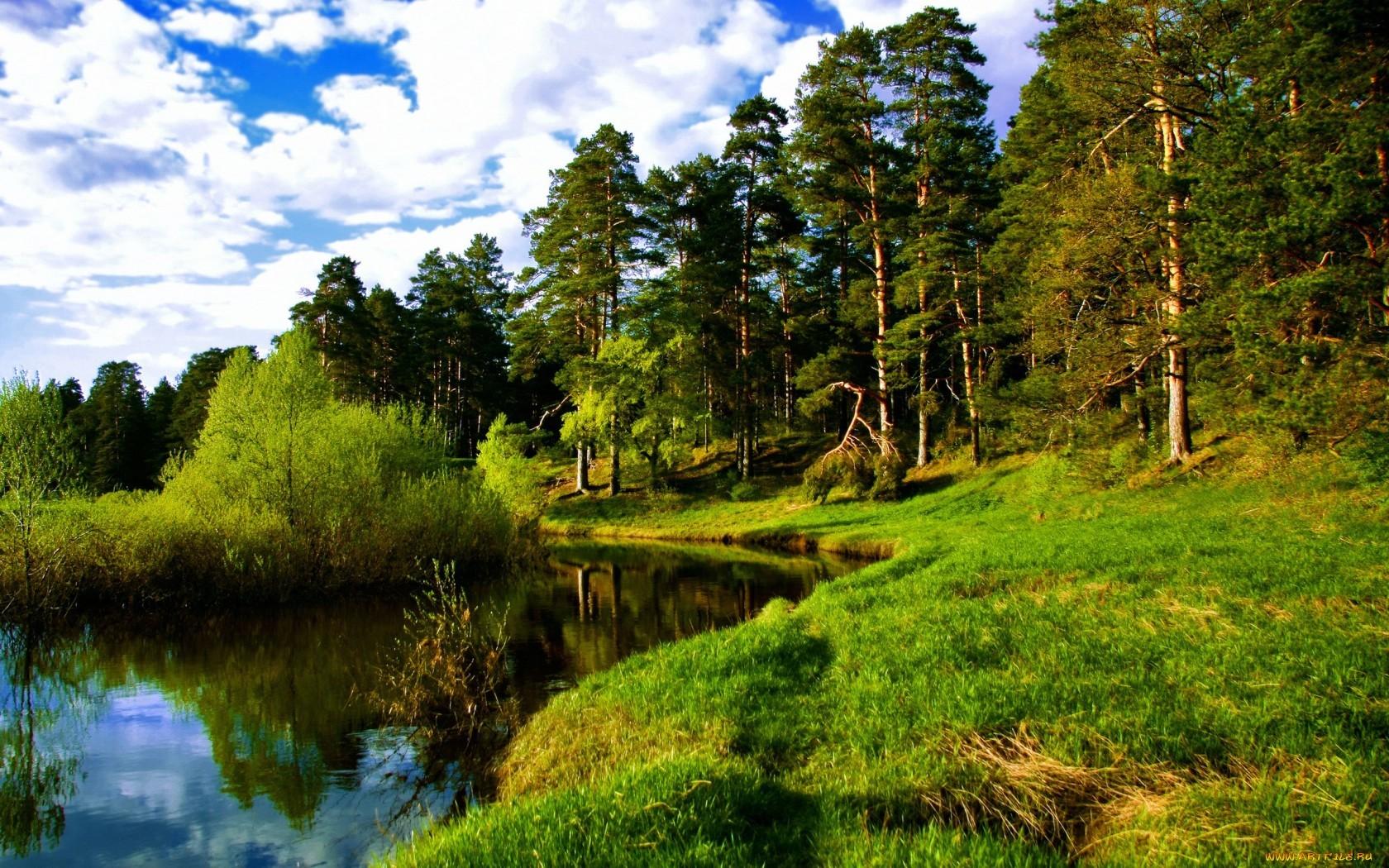 14398 скачать обои Пейзаж, Деревья - заставки и картинки бесплатно