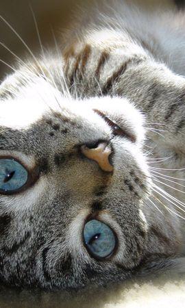25431 скачать обои Животные, Кошки (Коты, Котики) - заставки и картинки бесплатно
