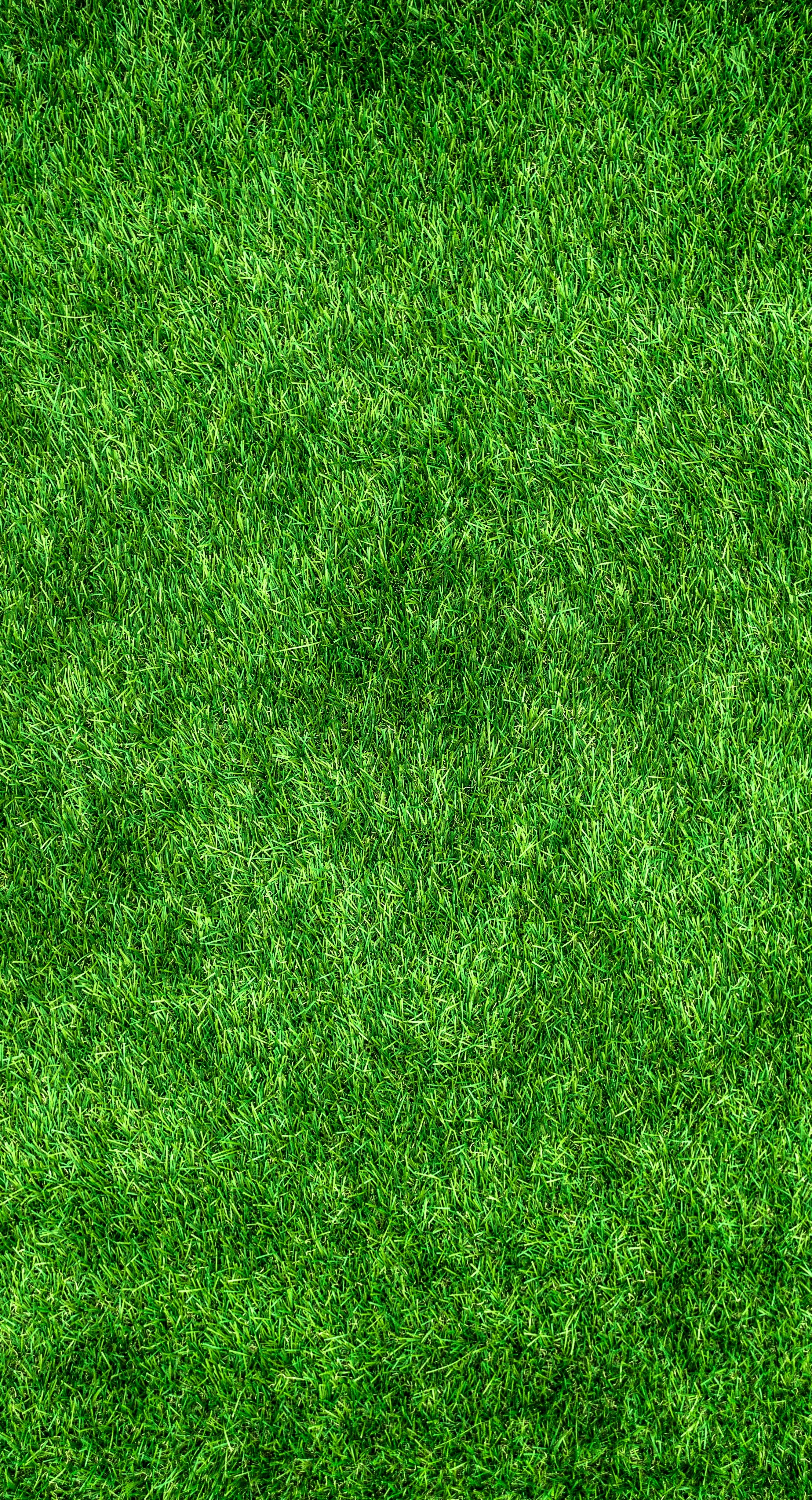 144047 download wallpaper Textures, Texture, Lawn, Grass, Thick, Surface screensavers and pictures for free