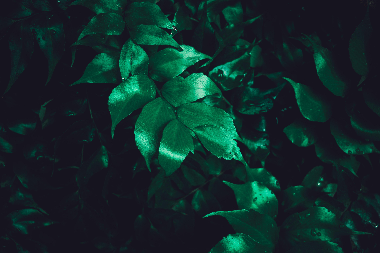 157620 descargar fondo de pantalla Naturaleza, Hojas, Planta, Brillar, Brillo, Superficie: protectores de pantalla e imágenes gratis