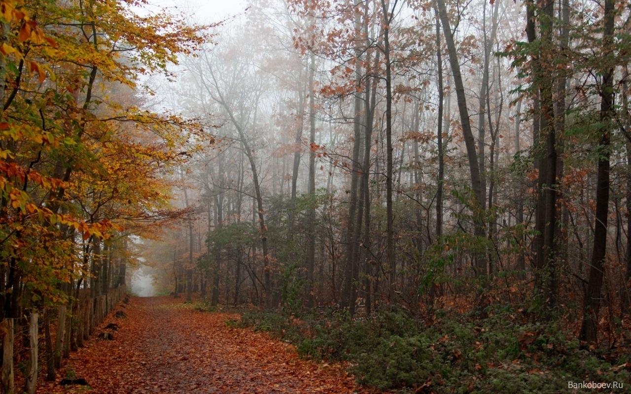 9054 скачать обои Пейзаж, Деревья, Осень - заставки и картинки бесплатно